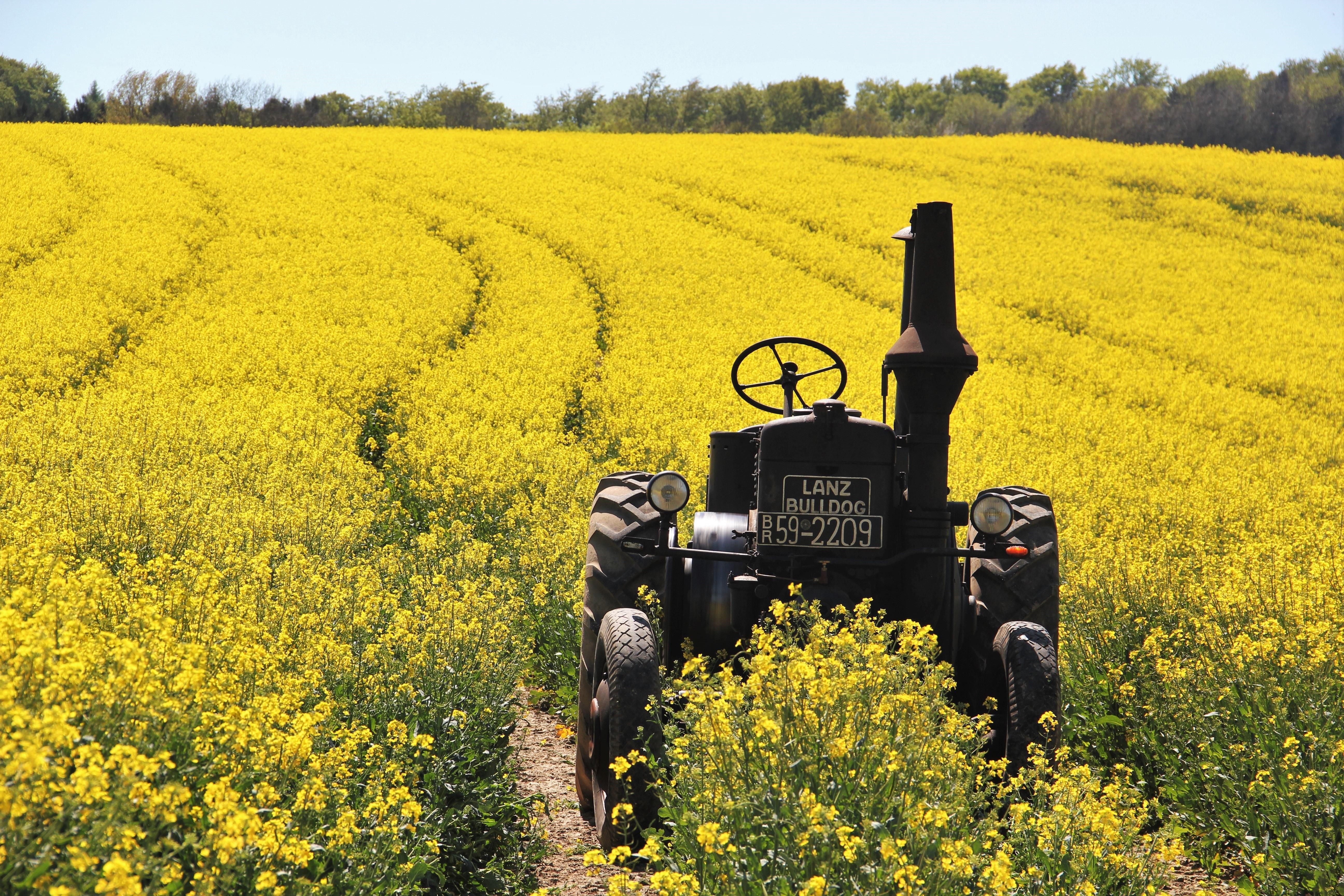 Free Images Nature Farm Meadow Prairie Flower Food Spring