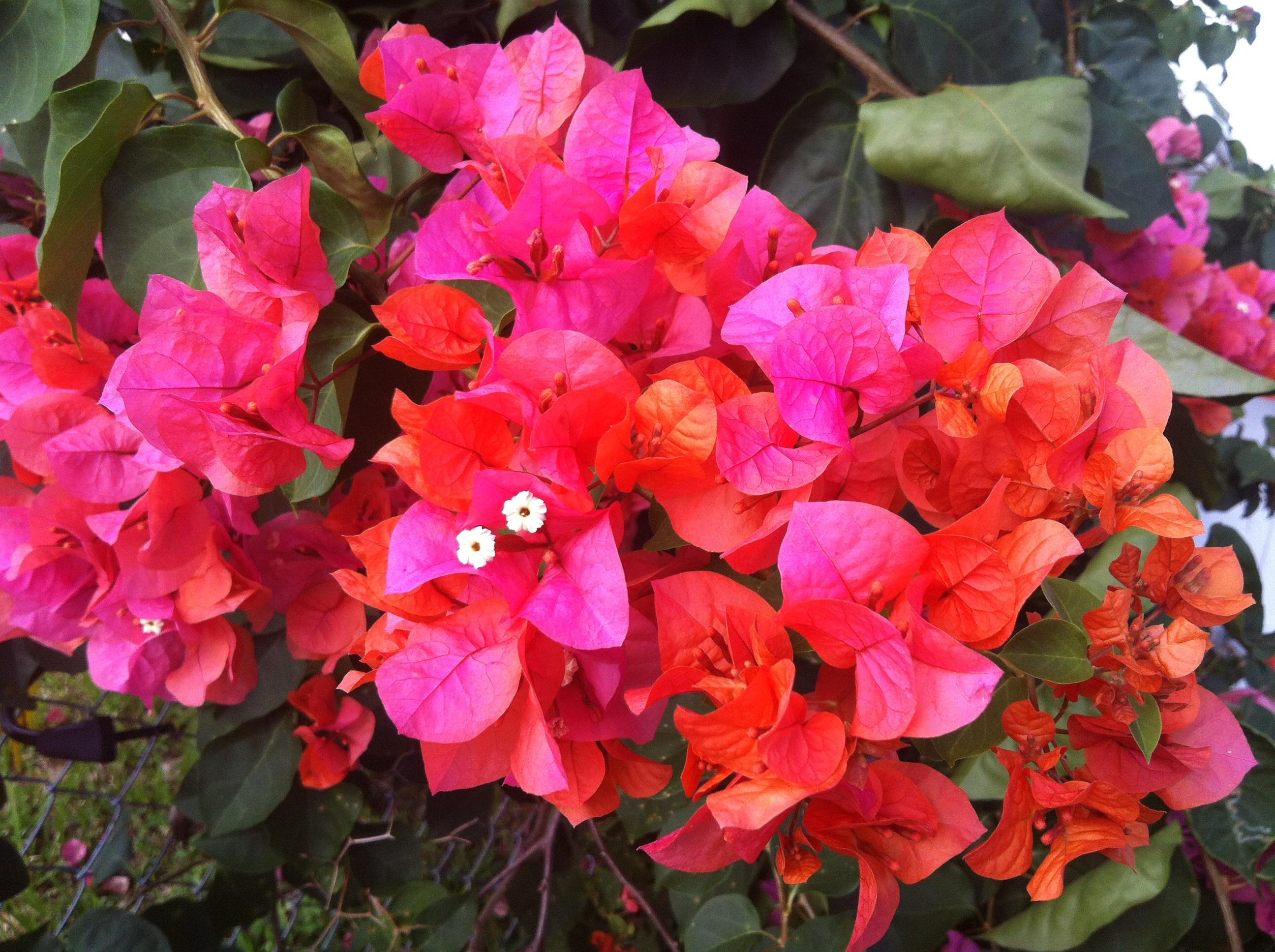 Free Images Nature Vine Flower Petal Bloom Summer Orange