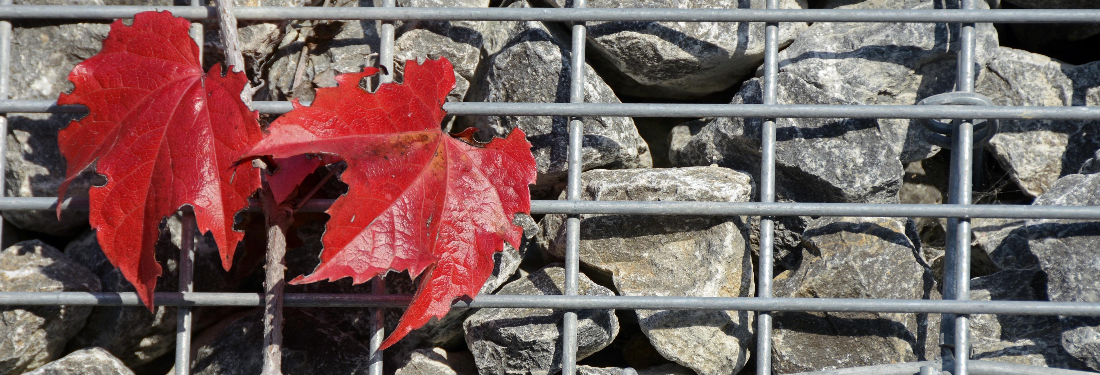 Fotoğraf Doğa Bitki Gıda Kırmızı Afiş Dağcı Taş Duvar