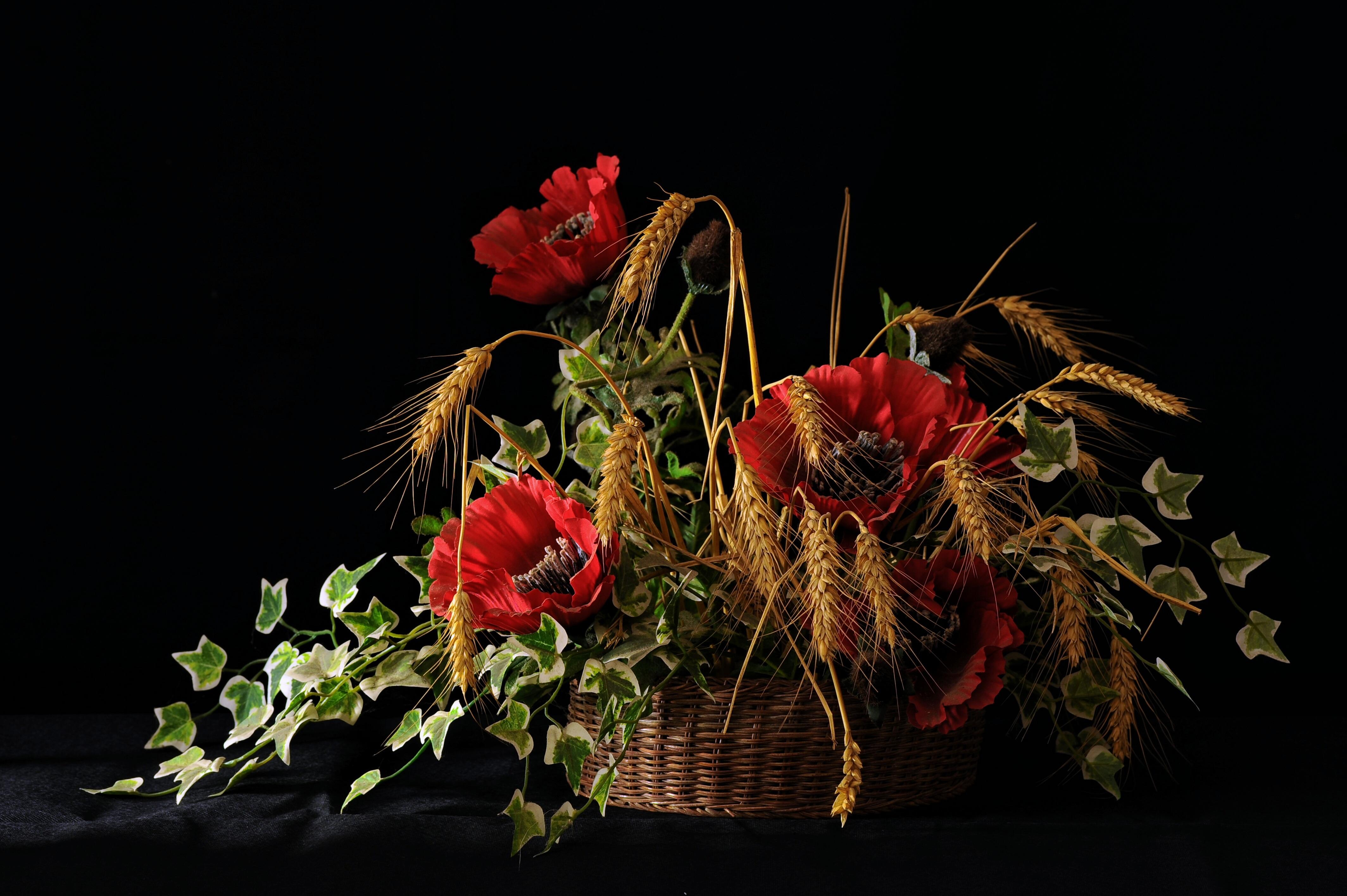 Fotoğraf Doğa Buğday çiçek Kırmızı Sonbahar Bitki örtüsü