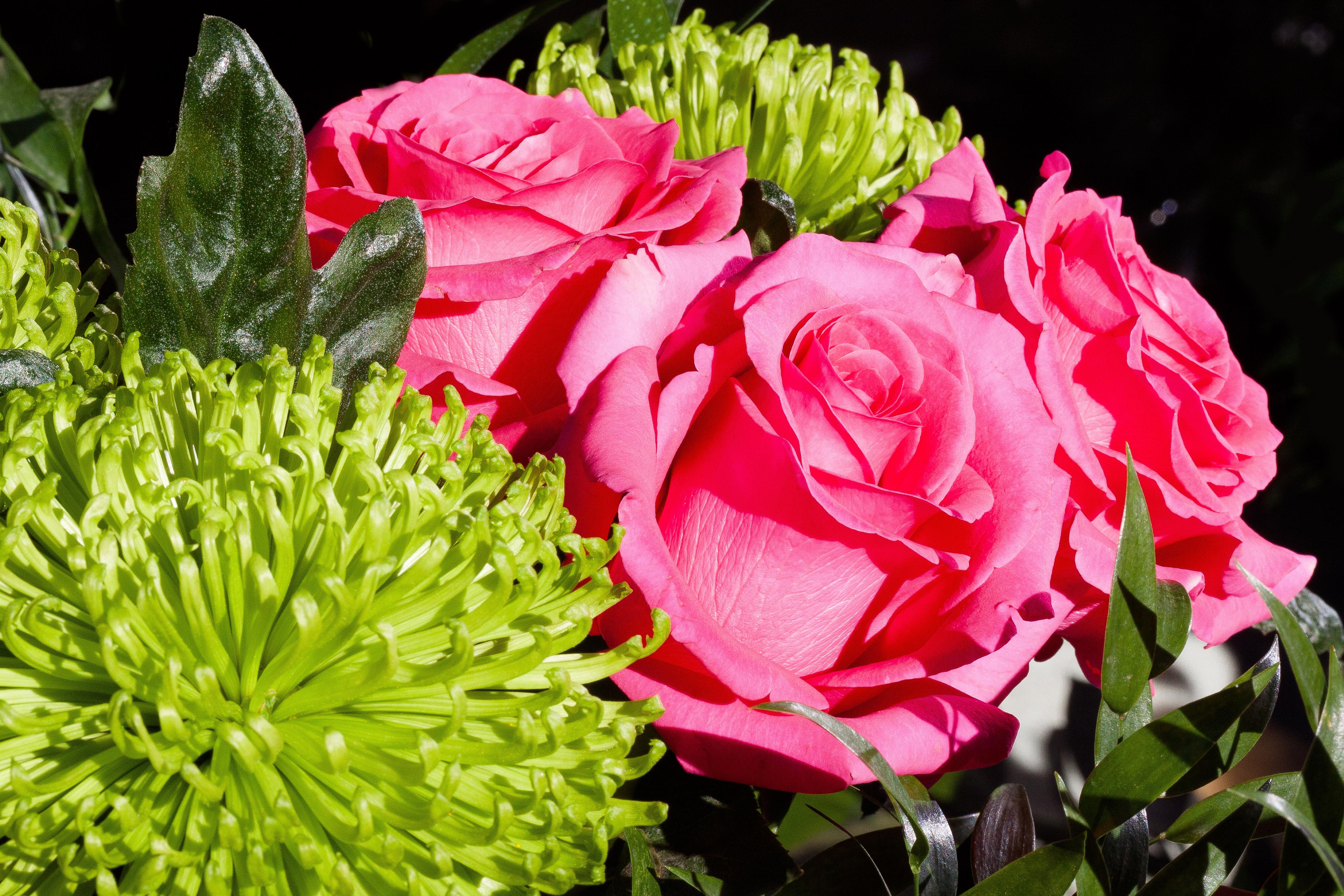 Картинки букет цветов для оли оформление