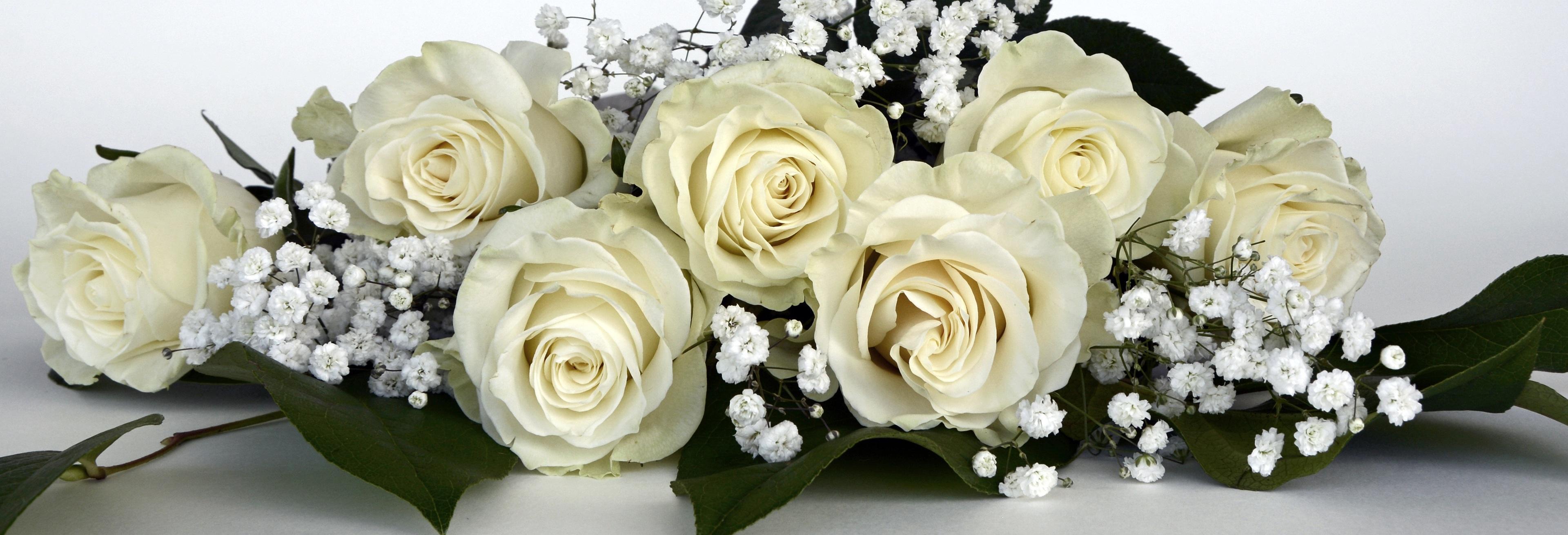 Free Images Nature White Petal Love Banner Romance Wedding