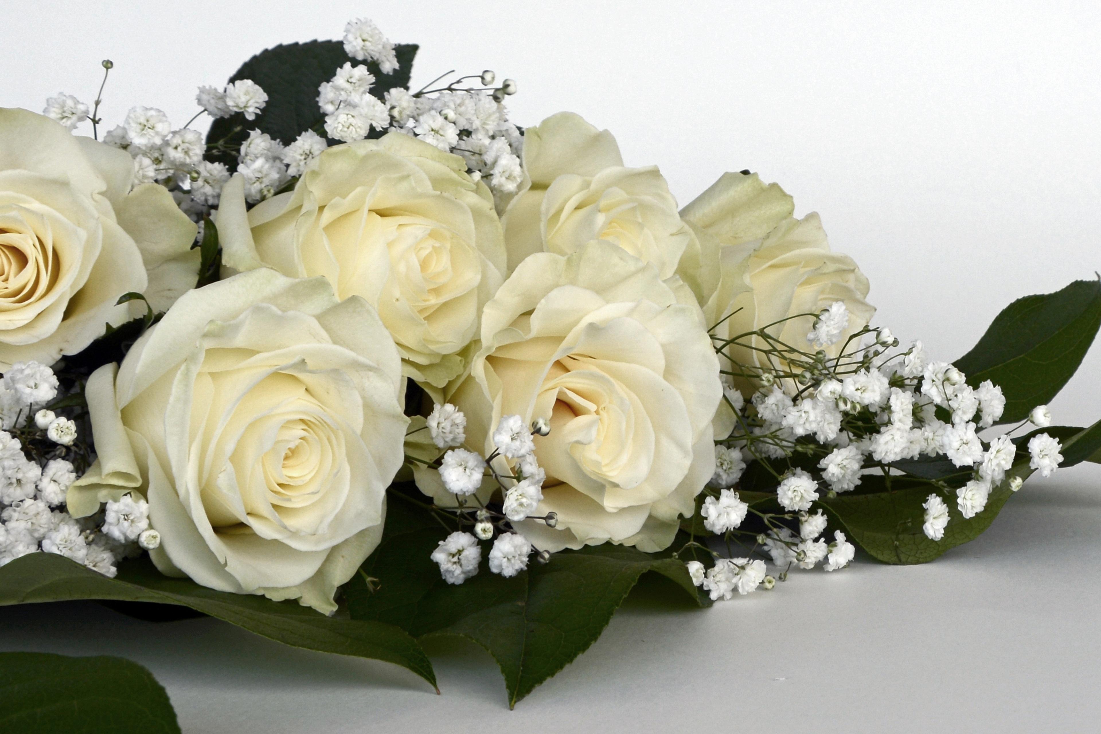 несовершенств диагностических смотреть картинки с белыми розами букеты