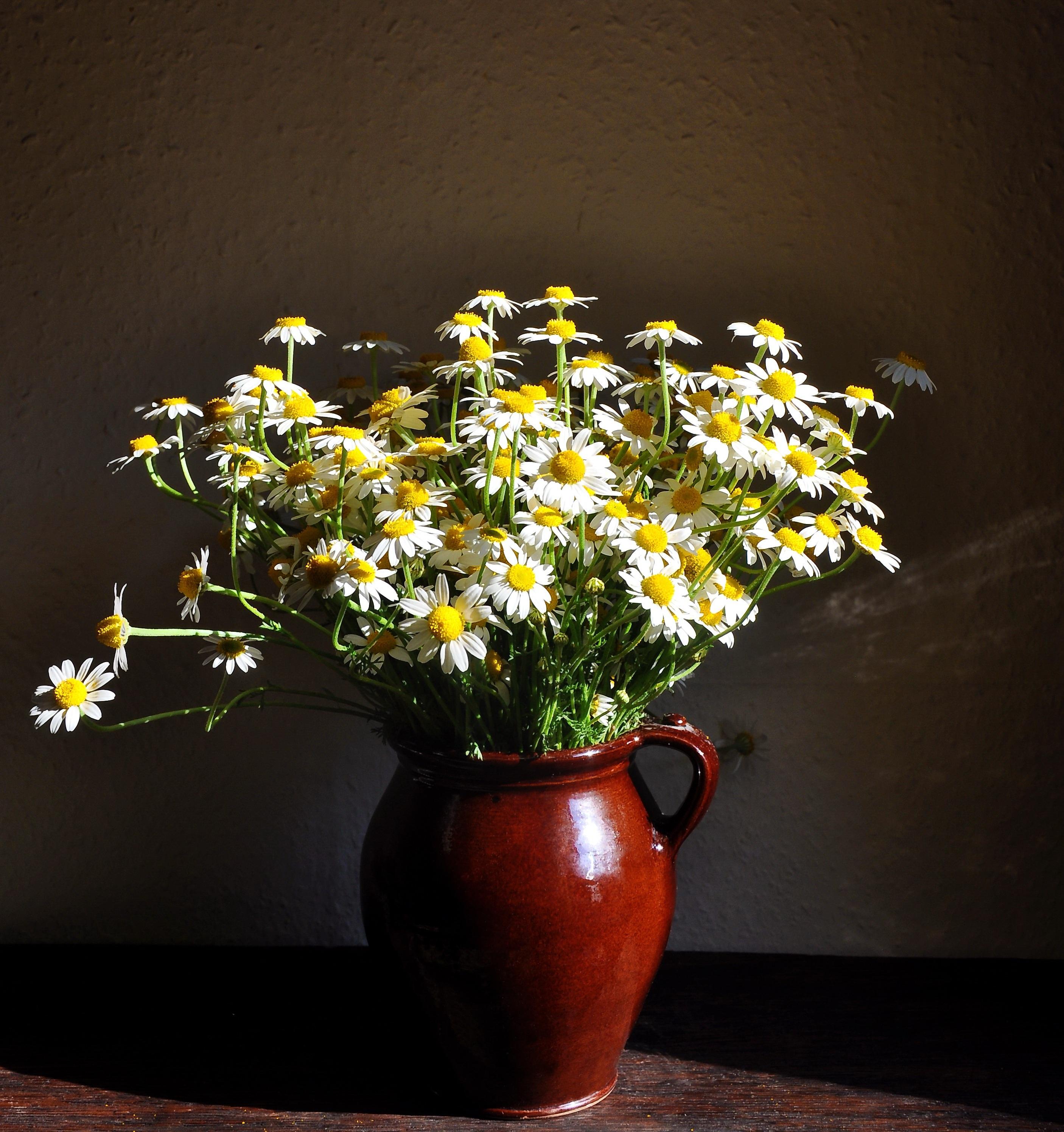 Fotograf Doga Beyaz Cicek Yaz Sari Bitki Ortusu Resim
