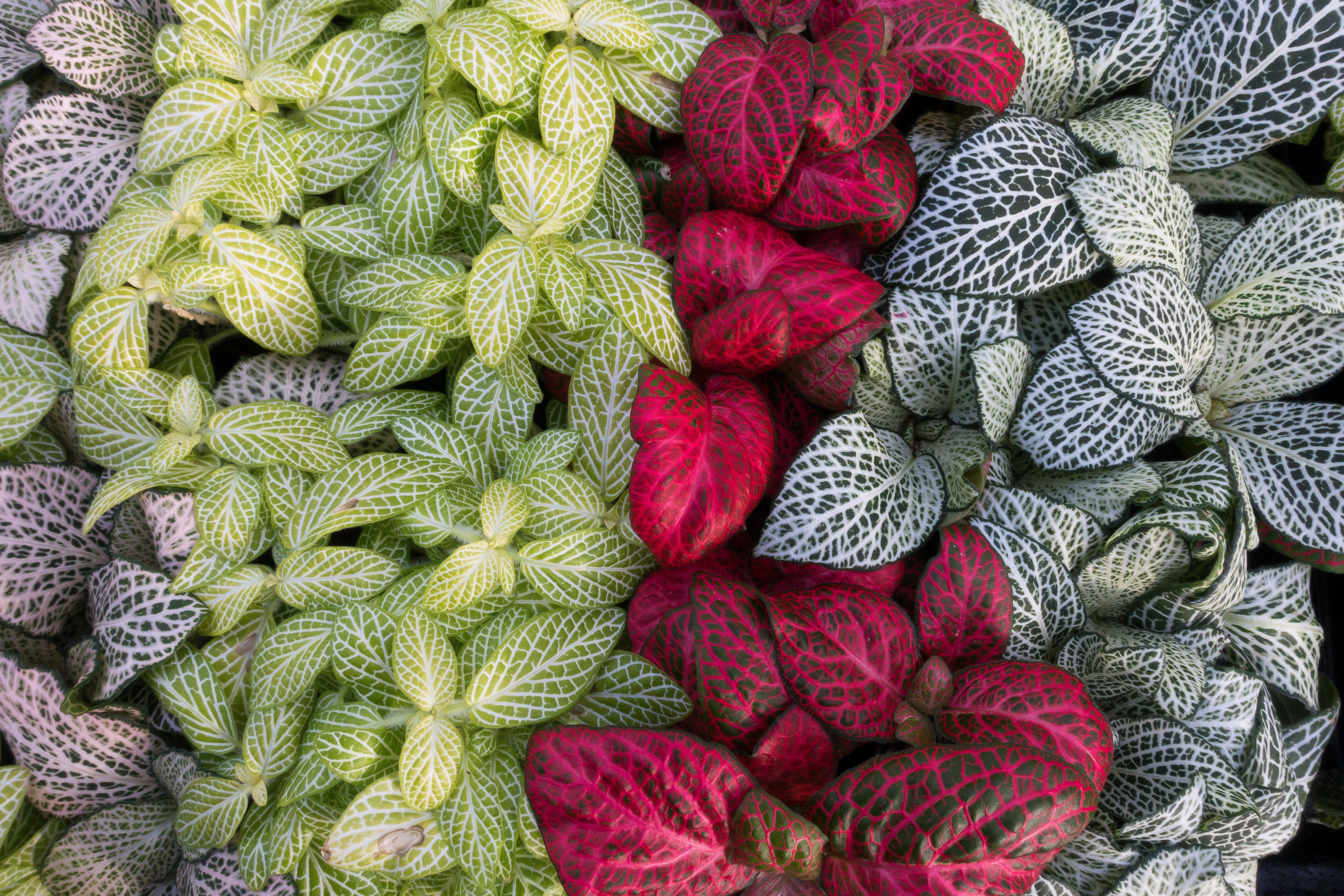 Kostenlose foto : Natur, Pflanze, Weiß, Blatt, Blume, Blütenblatt ...