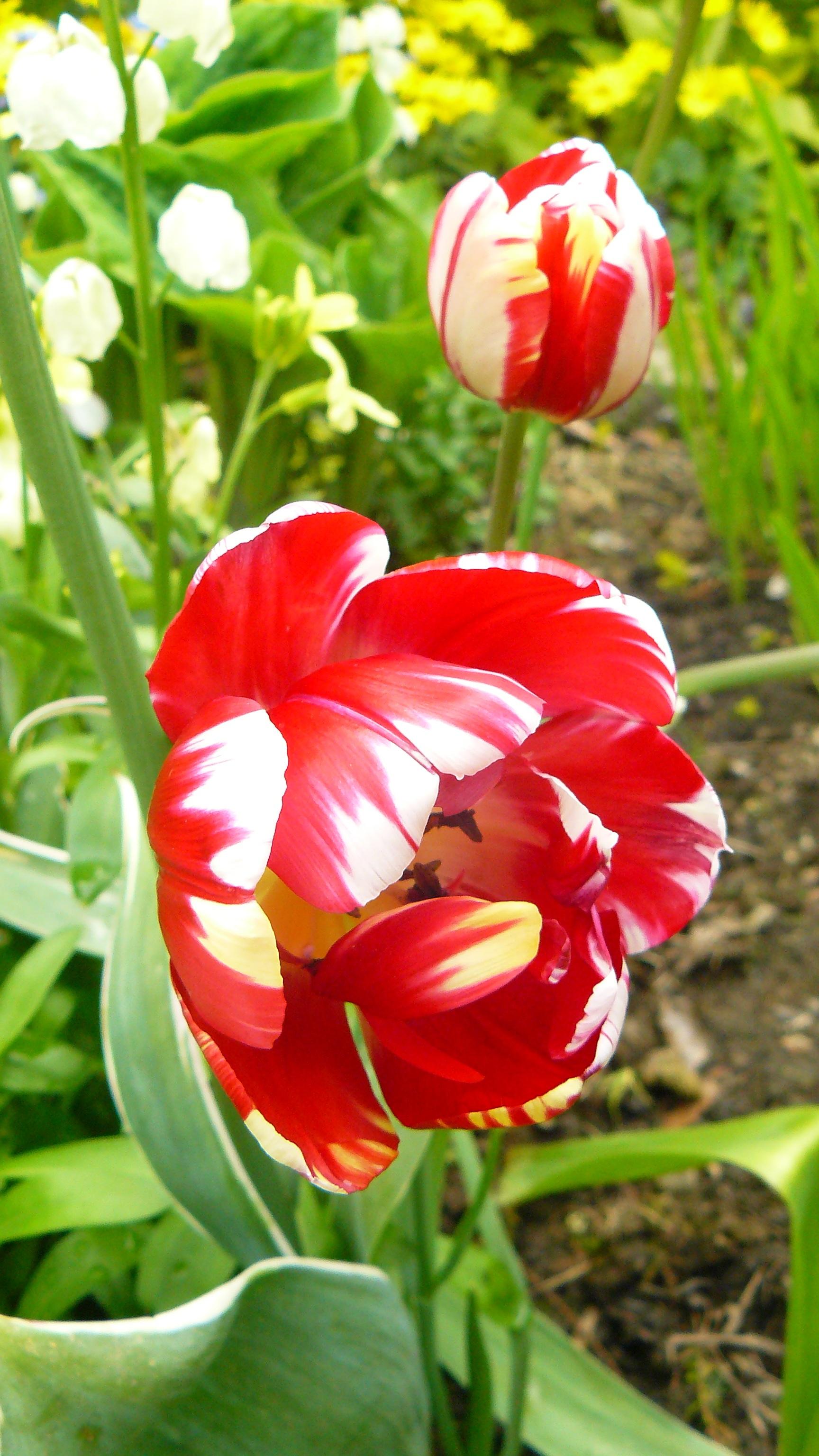 Free Images : nature, white, stem, leaf, flower, petal, bloom ...