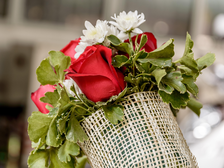 images gratuites la nature blanc cru fleur p tale isol rose vert rouge produire. Black Bedroom Furniture Sets. Home Design Ideas