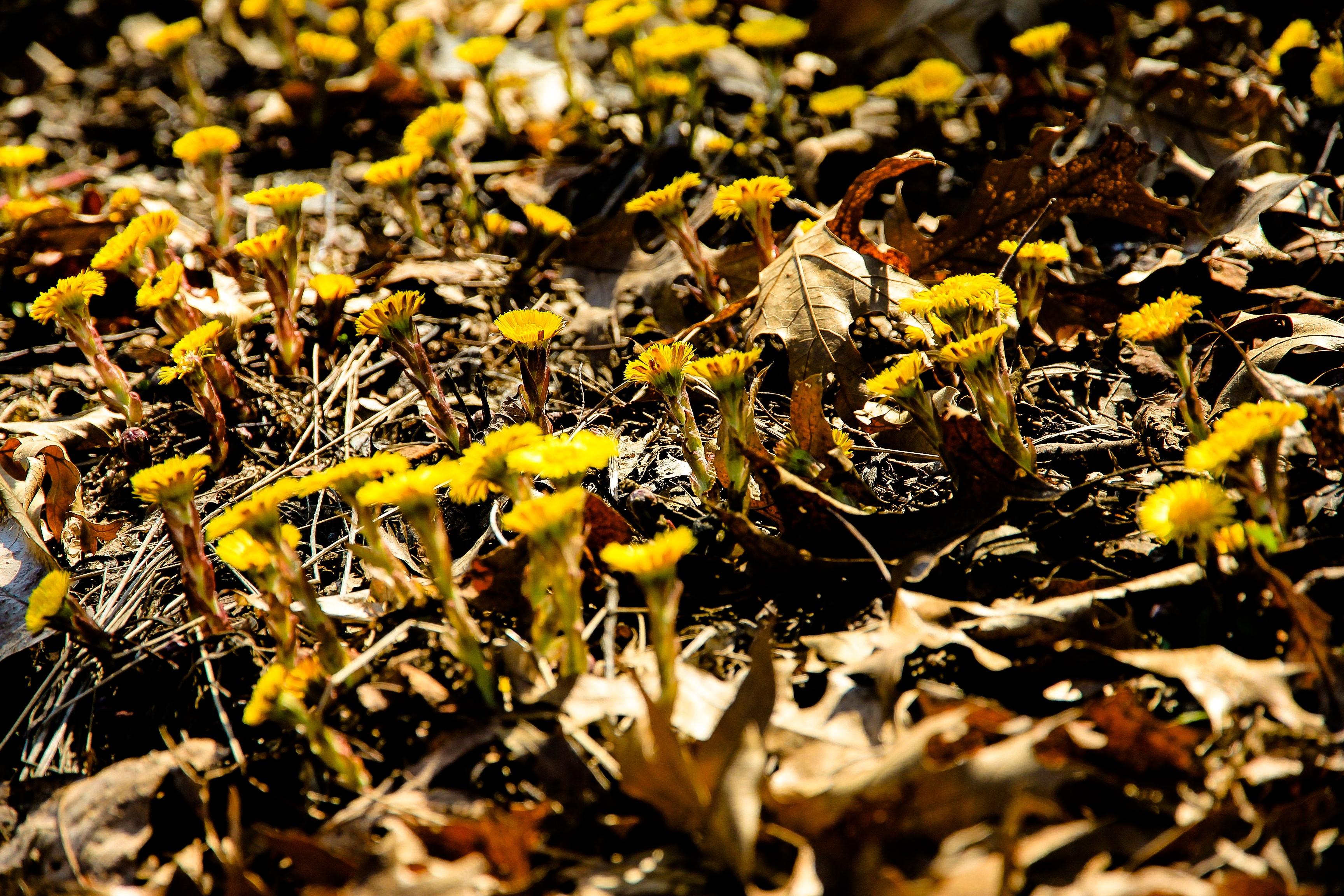 В земле цветов насекомые