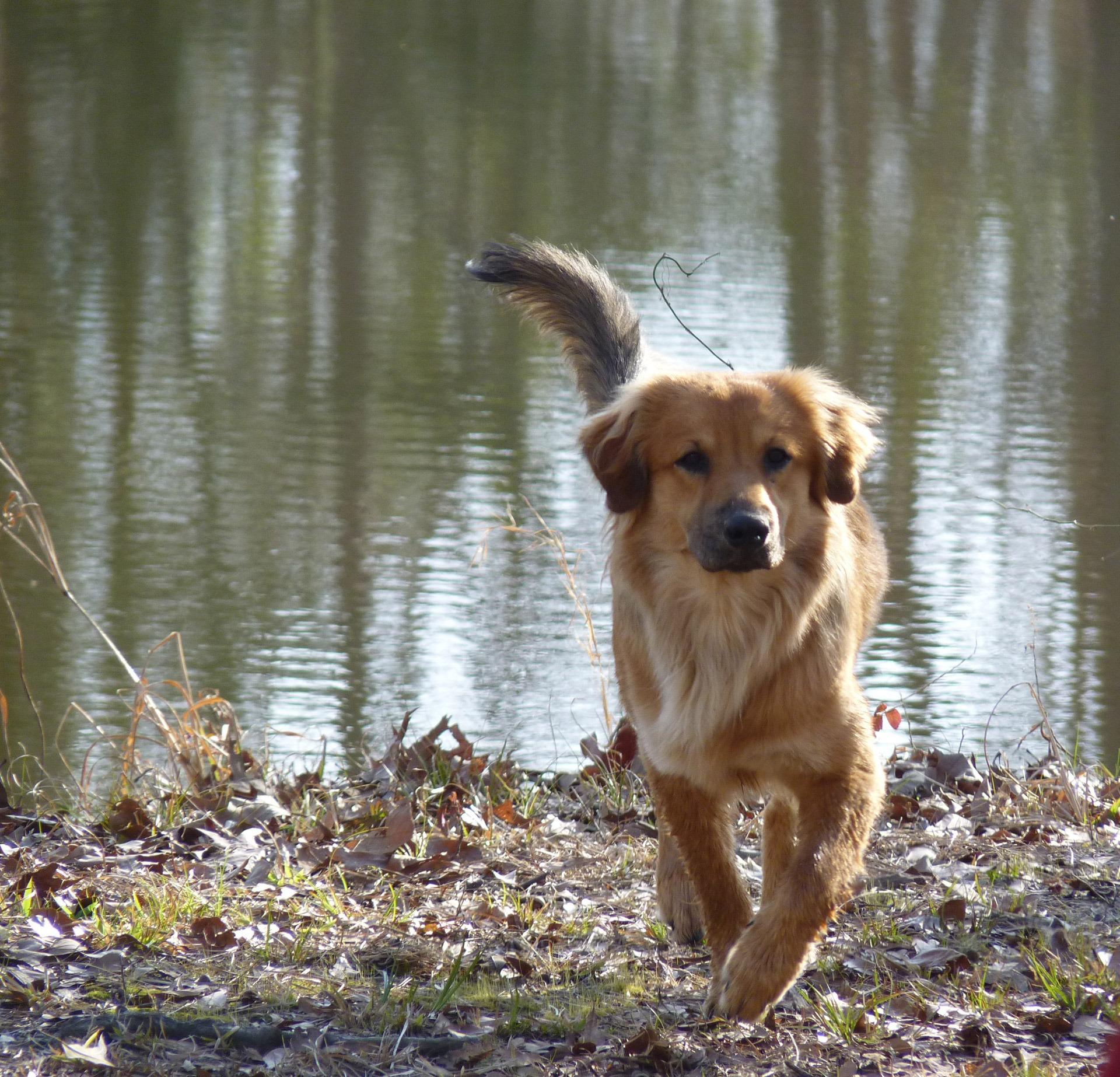 Fotos gratis naturaleza perrito perro canino ladrar for Estanque para perros