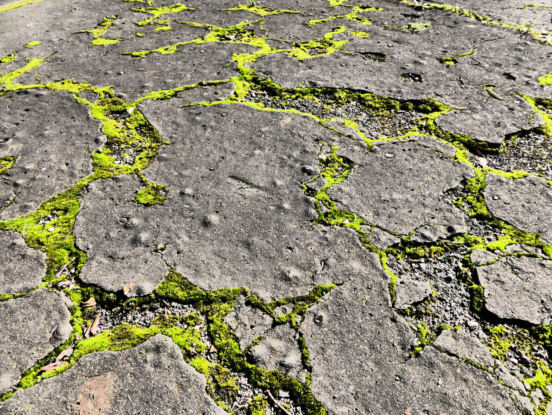 무료 이미지 자연 록 빛 거리 들 잎 시티 아스팔트 이끼 어두운 녹색 흙 갈라진