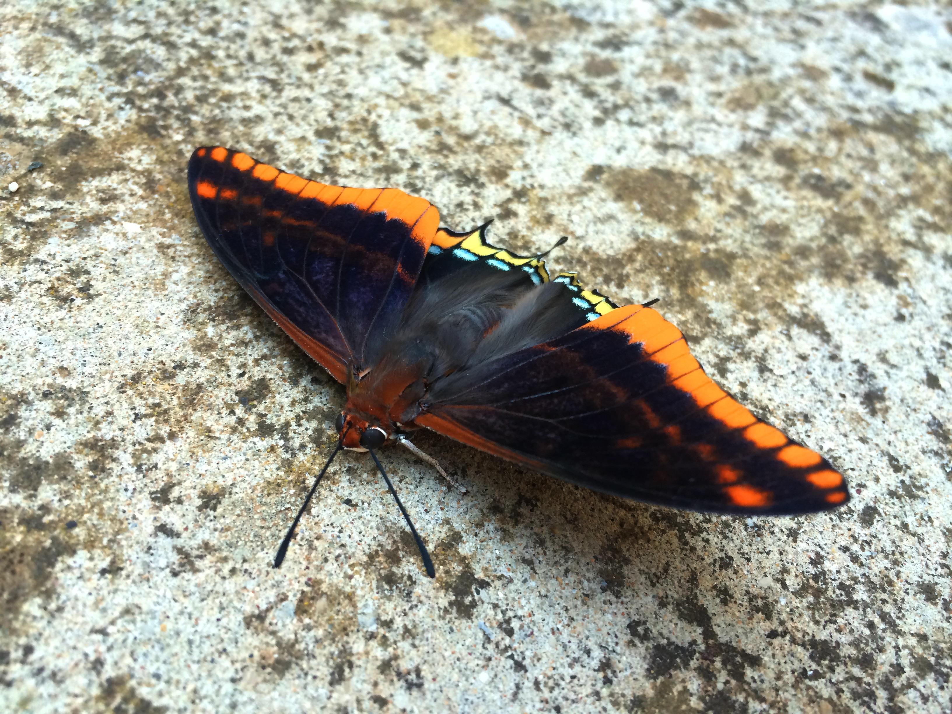 Gratis afbeeldingen natuur rots vleugel wit blad dier steen zomer wildlife wild - Zomer keuken steen ...