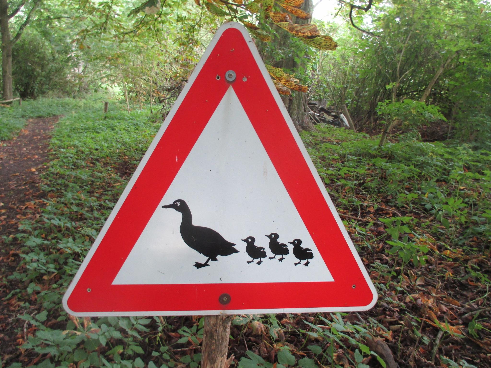 придумать дорожный знак картинки считает чем-то