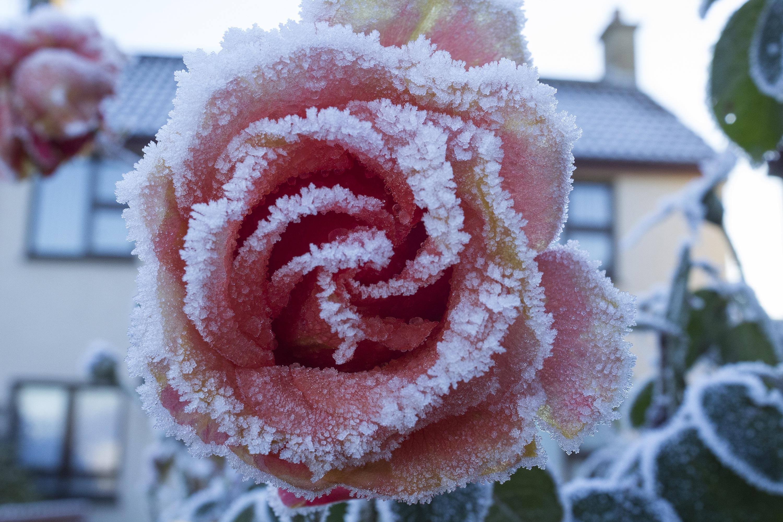 Холодные цветы картинки
