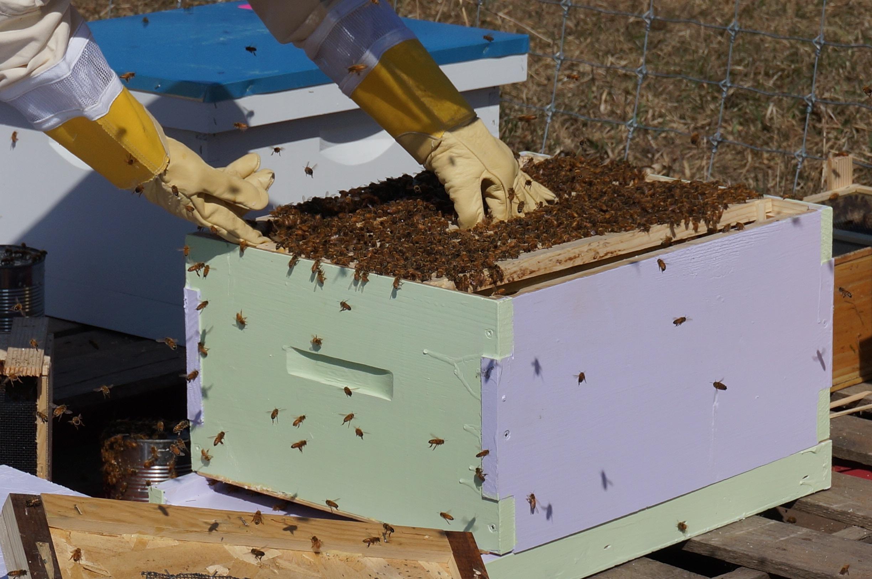 Fotos gratis : naturaleza, traje, granja, miel, polen, insecto ...