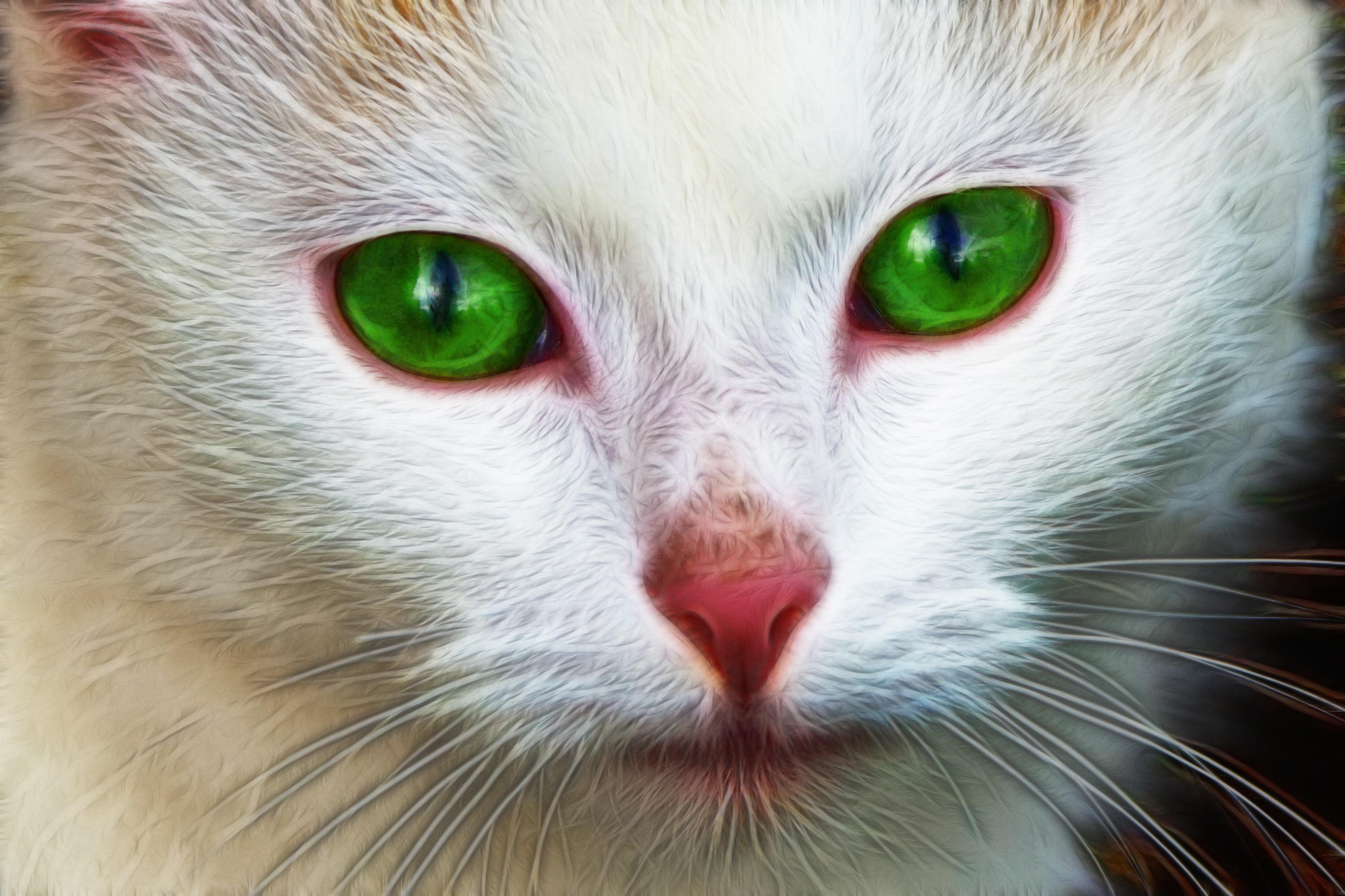 Free nature white animal pet portrait kitten