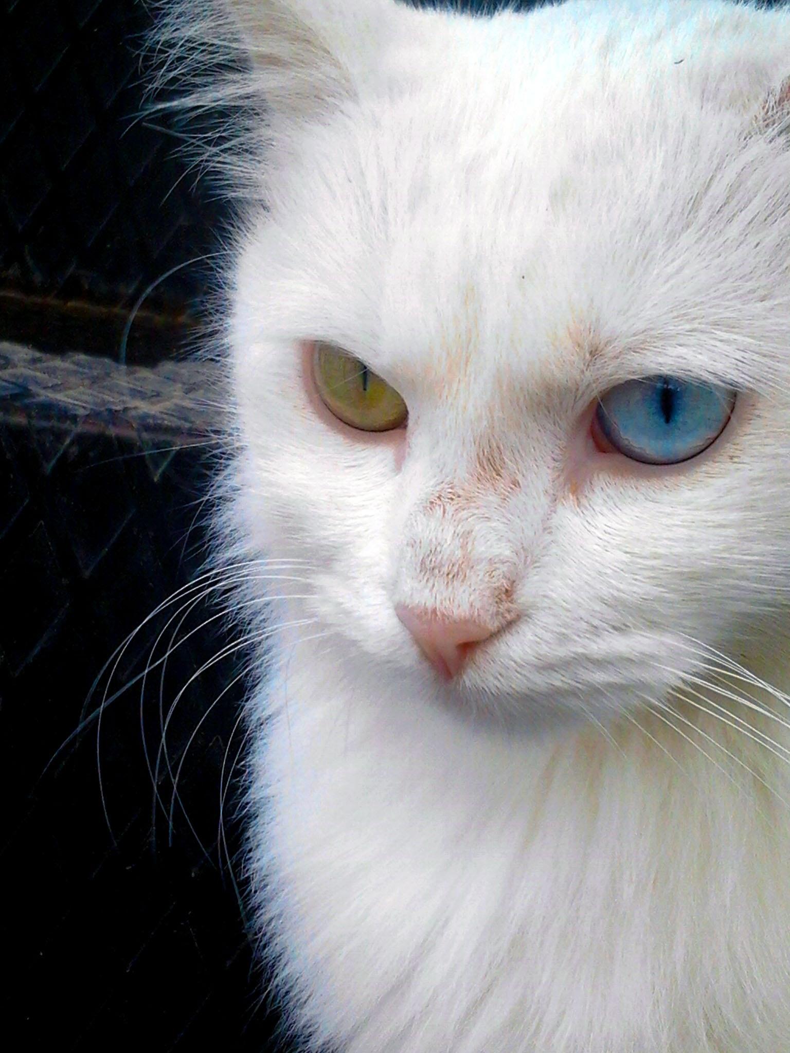 Download 67+  Gambar Kucing Imut Kartun Paling Keren Gratis
