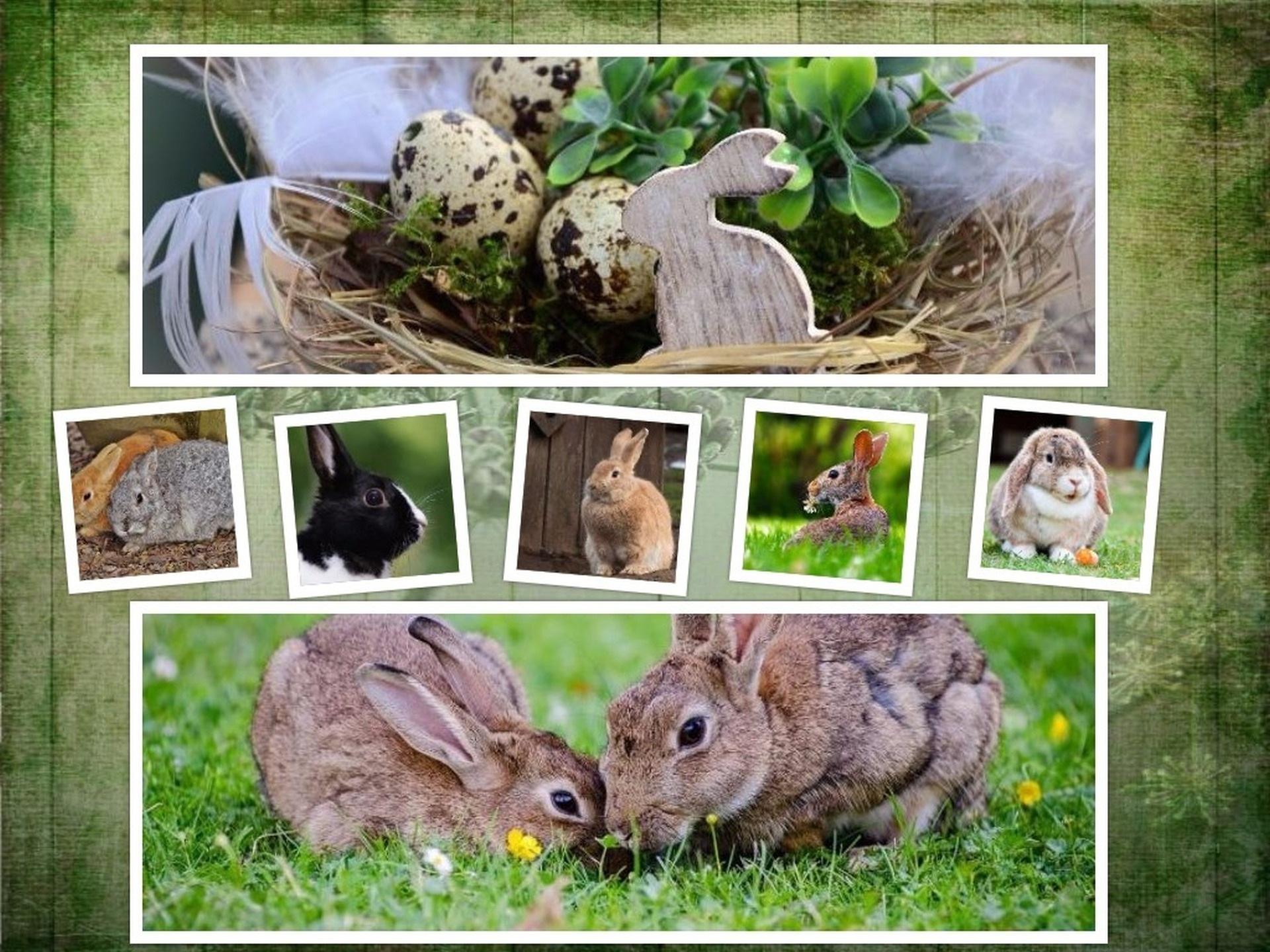 6600 Koleksi Gambar Hewan Dan Lingkungan Hidupnya HD Terbaru