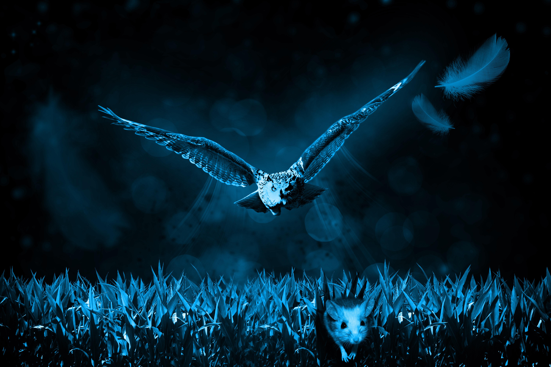 Unduh 88  Gambar Burung Hantu Sedang Terbang  Terbaru Gratis
