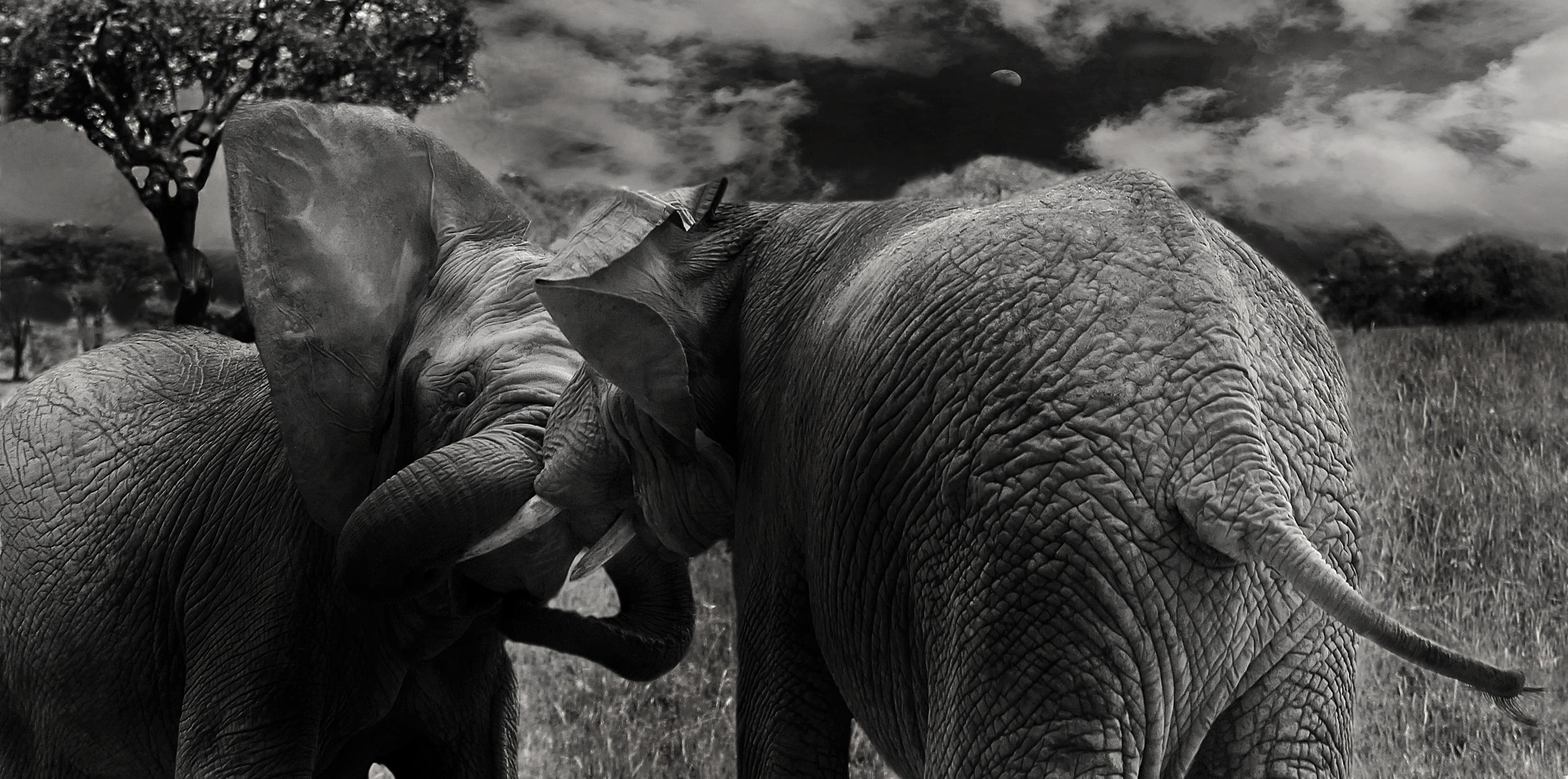 Images gratuites la nature r gion sauvage noir et - Images d animaux sauvages gratuites ...