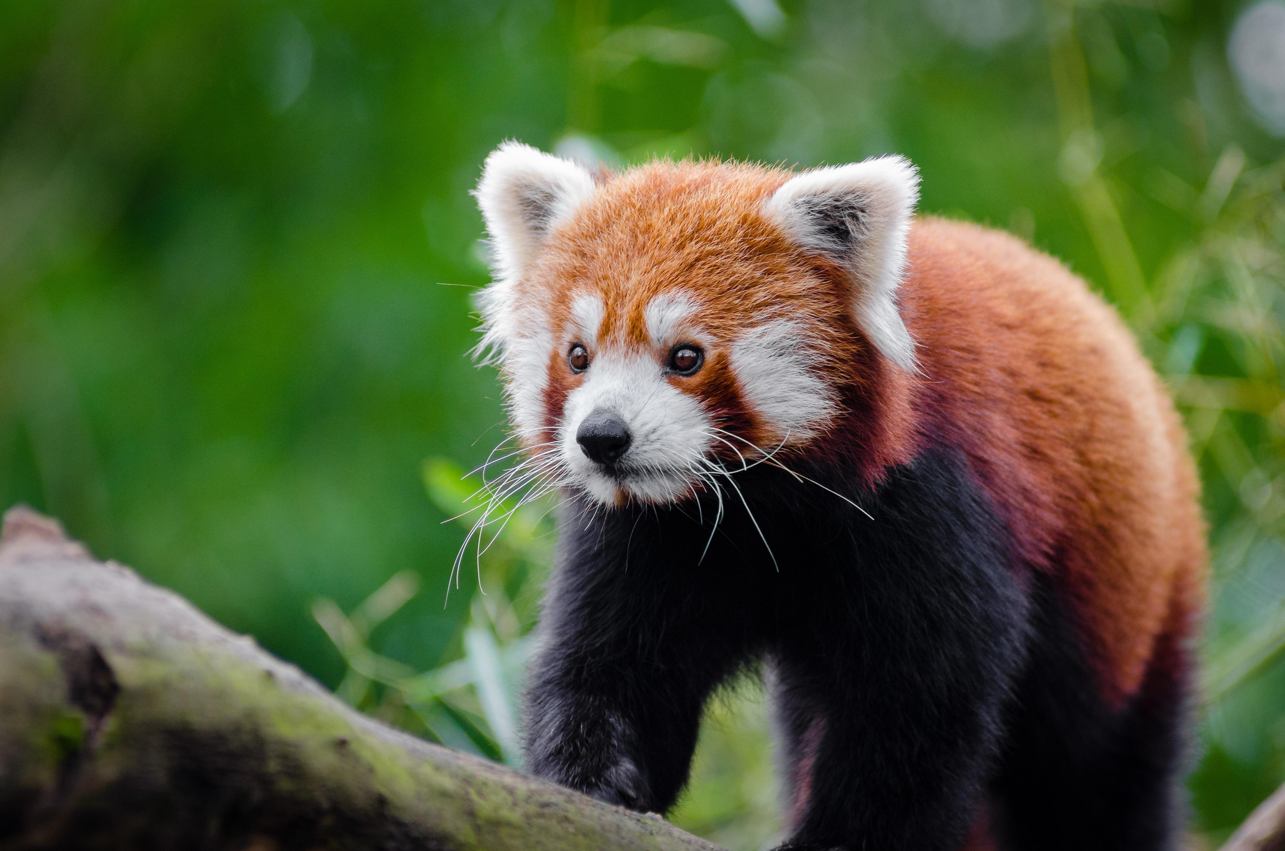 Images gratuites la nature r gion sauvage brouiller - Images d animaux sauvages gratuites ...
