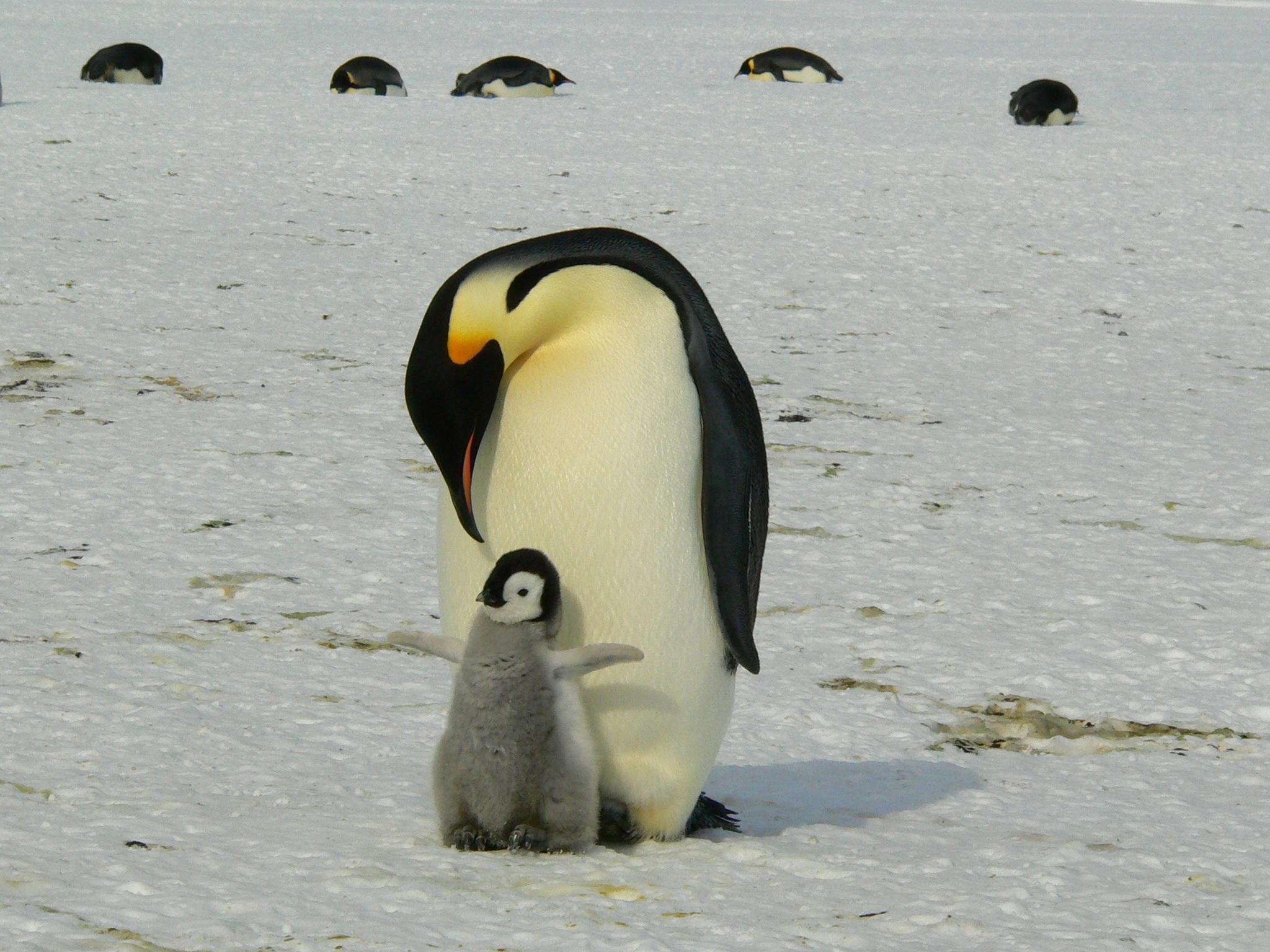 Fotos concentracion pinguinos 2012 42