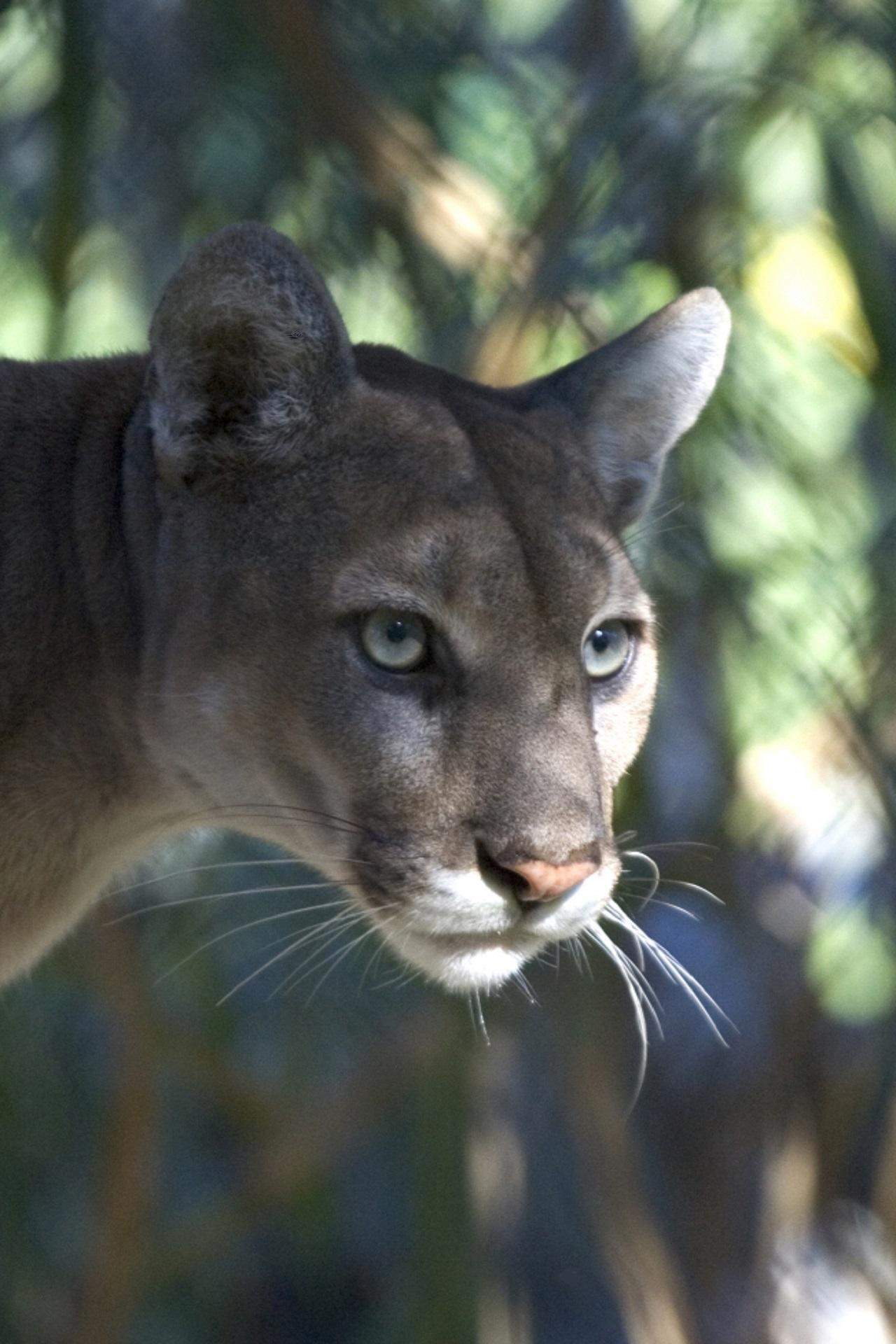 La Rencontre Cougar Sans Payer, Sans Argent