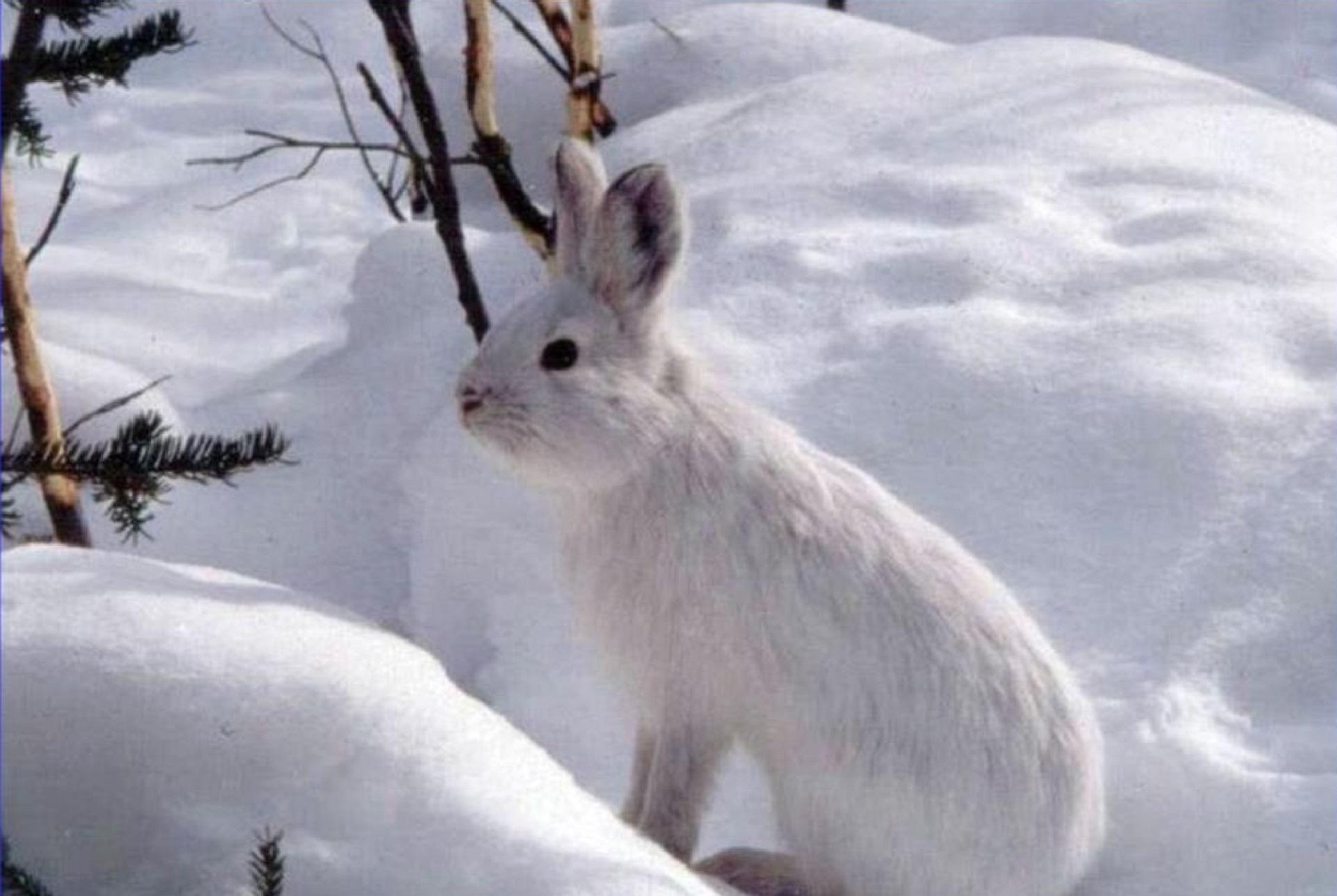 Images gratuites la nature r gion sauvage neige hiver - Photos de neige gratuites ...