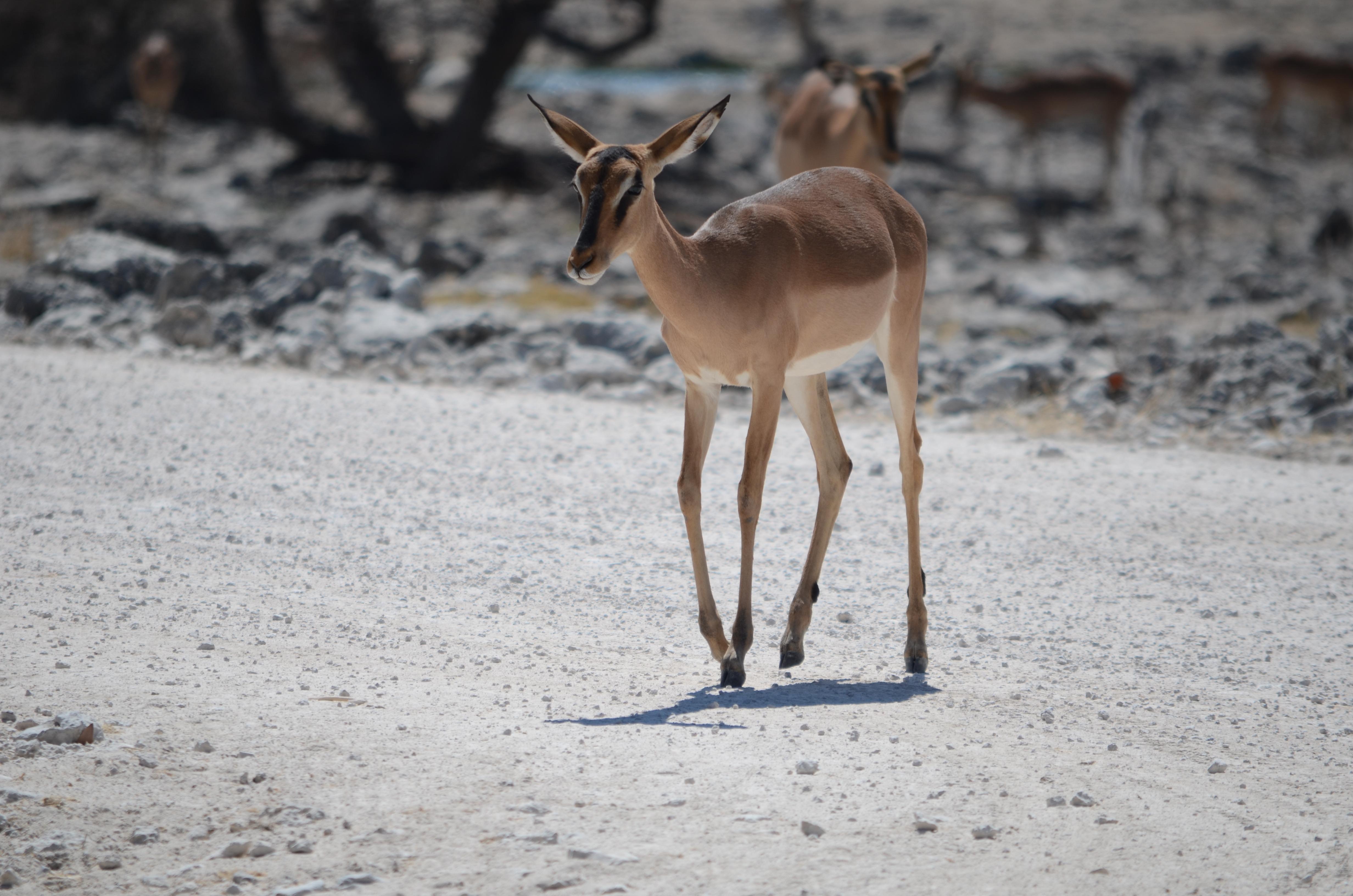 Images gratuites la nature r gion sauvage hiver chaud - Images d animaux sauvages gratuites ...
