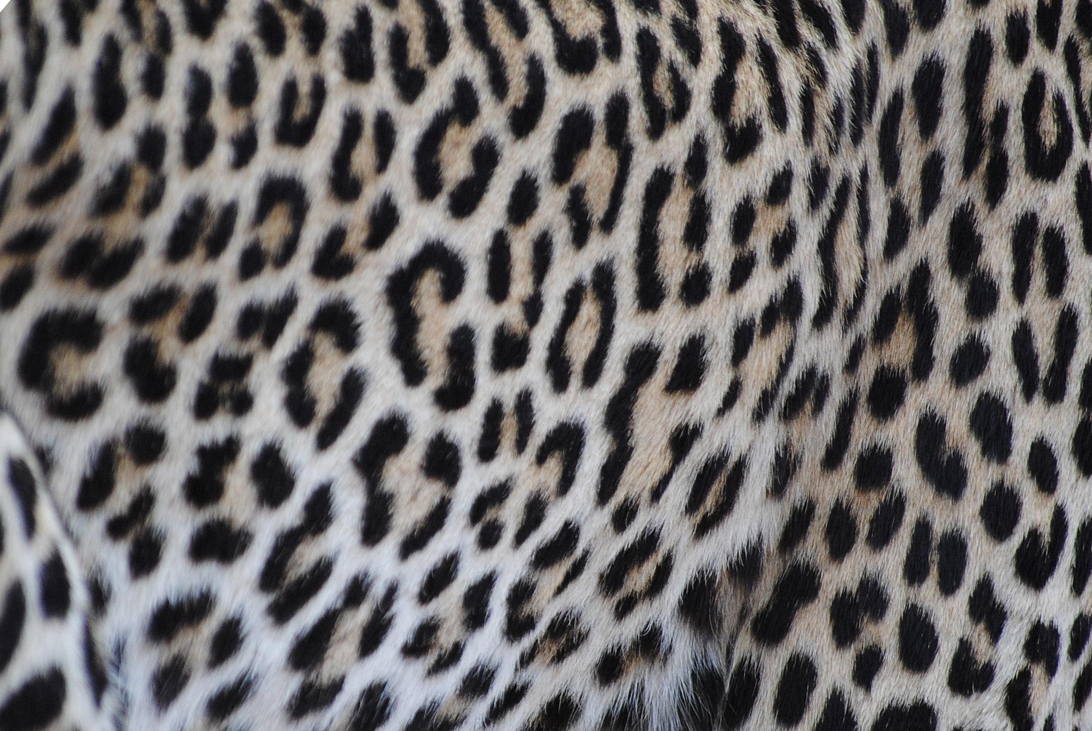 картинка кожа леопарда рассказывал, что