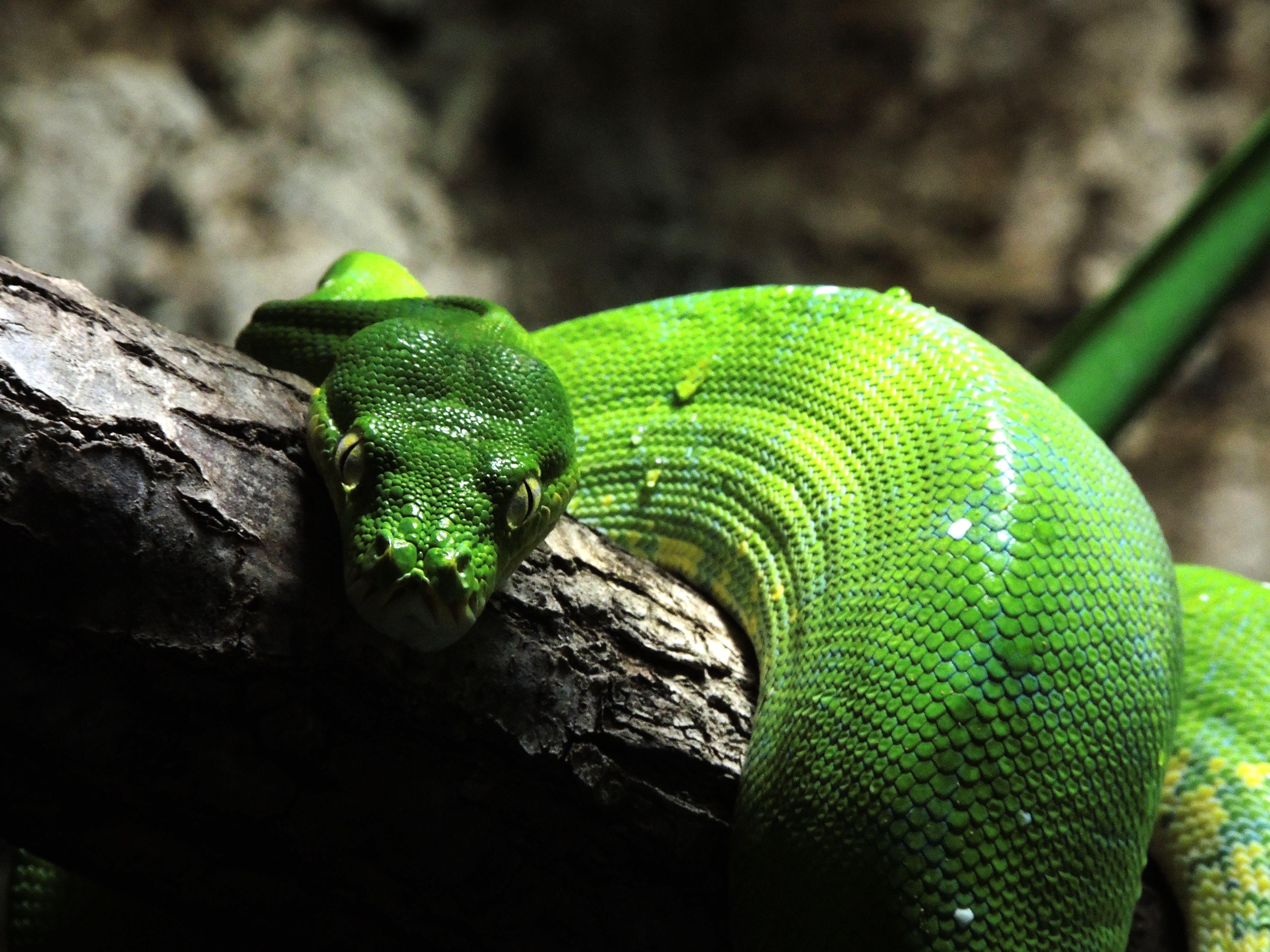 Картинки змей и ящерицы