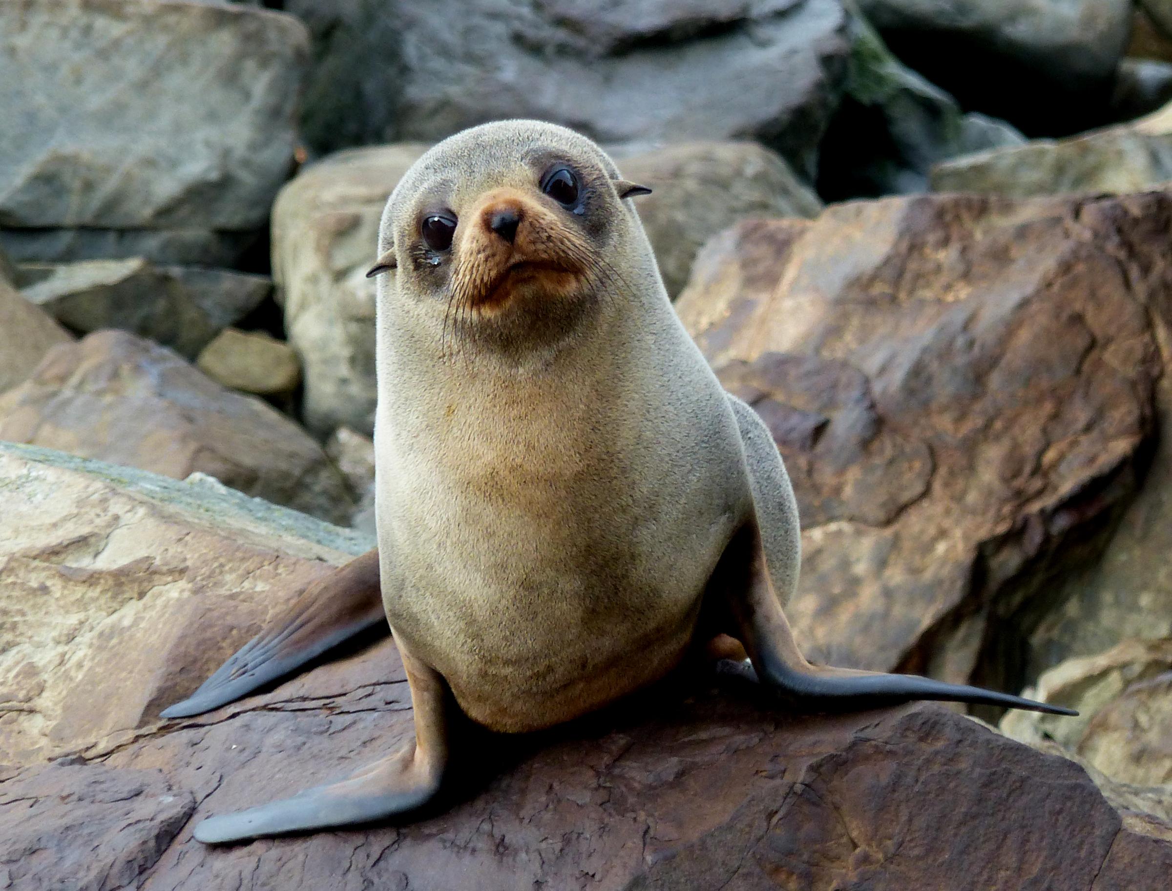 Penembakan Selandia Baru Wikipedia: Gambar : Alam, Margasatwa, Kebun Binatang, Bulu, Biologi