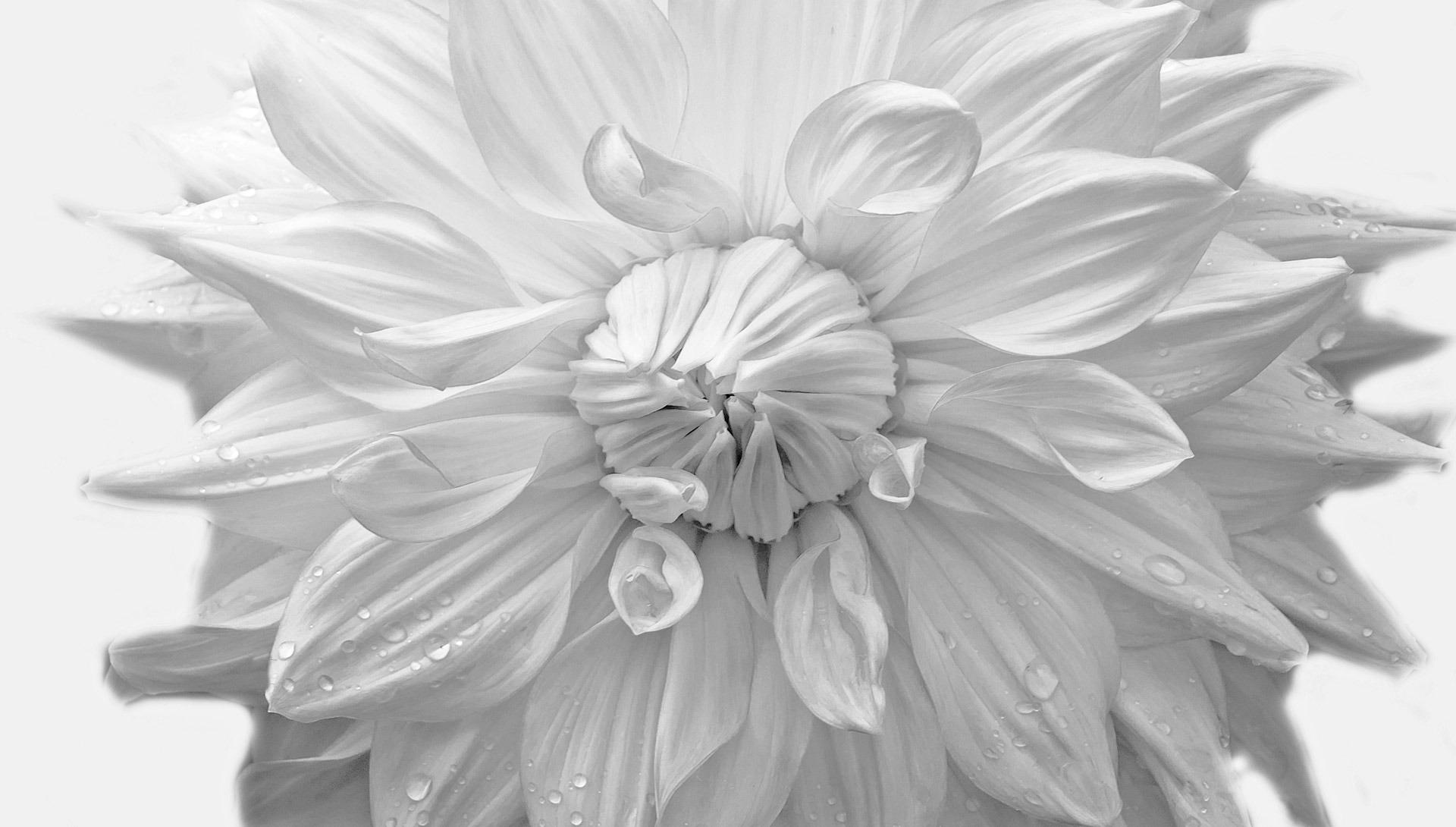 Gambar Alam Sayap Hitam Dan Putih Menanam Daun Bunga Musim