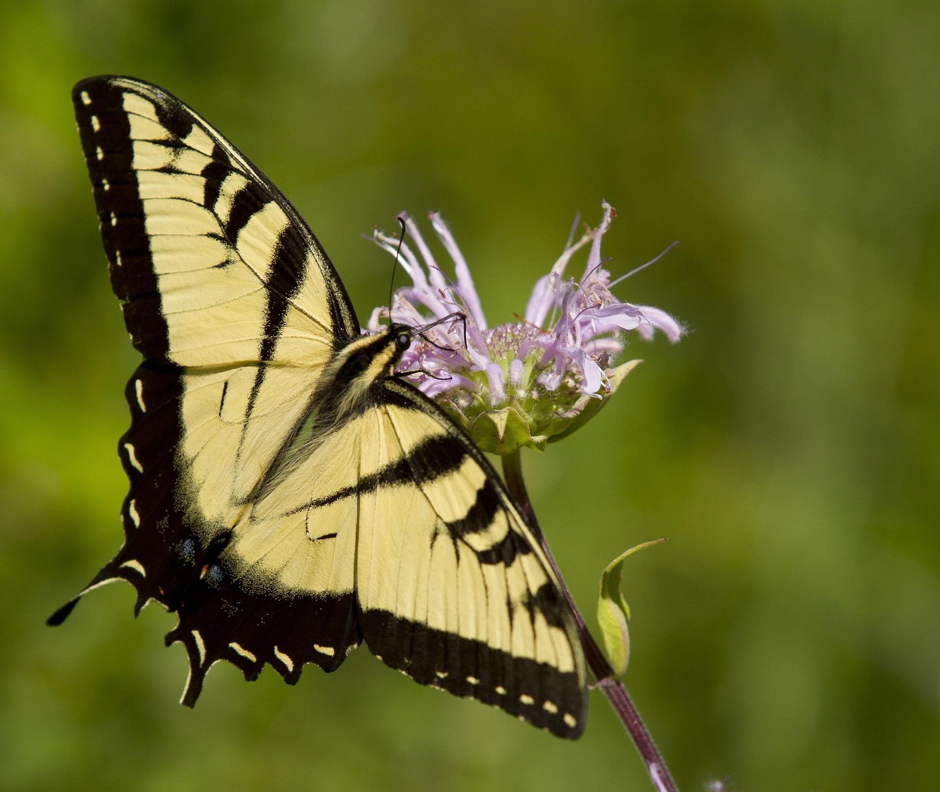 images gratuites   la nature  aile  fleur  faune  mod u00e8le