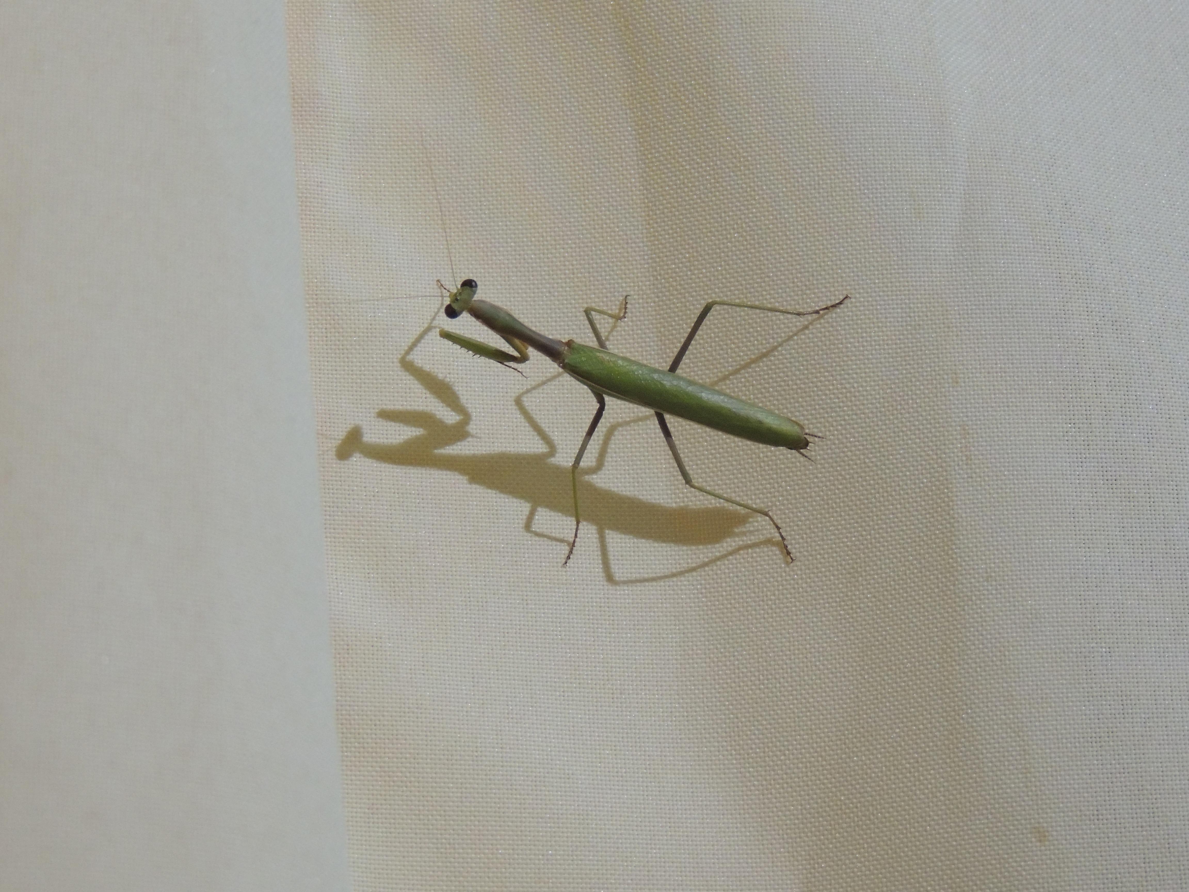 Gambar Alam Sayap Serangga Makro Invertebrata Seni