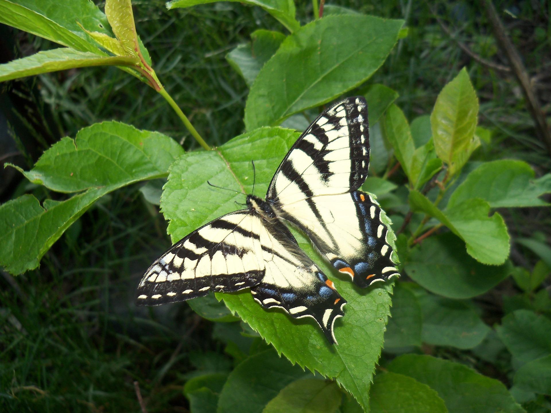 Images gratuites la nature aile feuille fleur vert - Image papillon et fleur ...