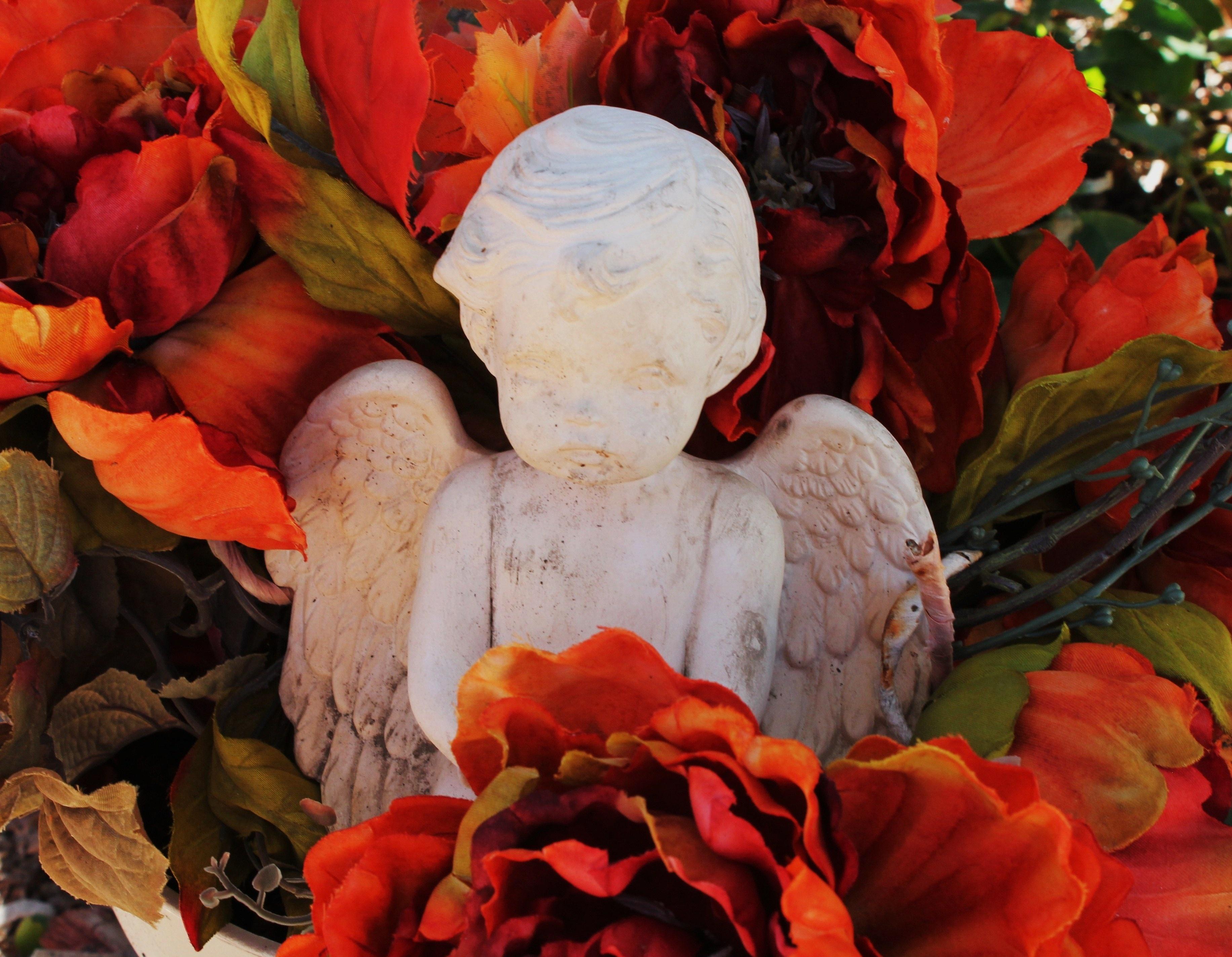 Fotos gratis : naturaleza, ala, planta, hoja, flor, piedra, estatua ...
