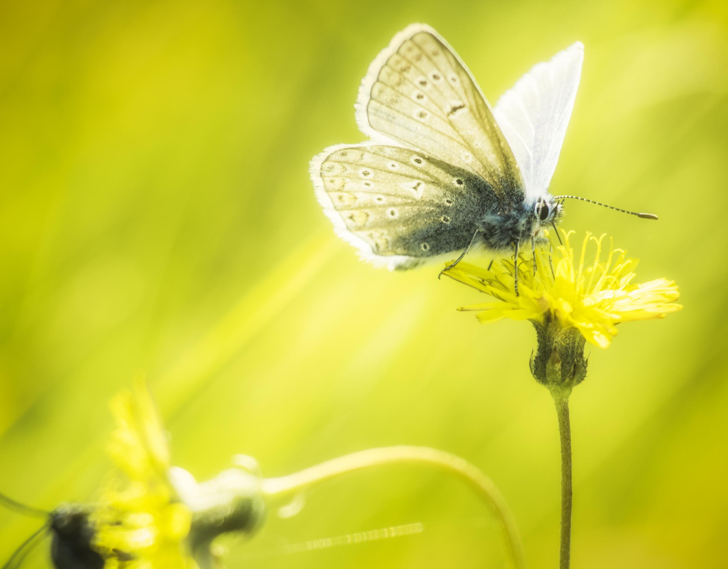 Gratis Afbeeldingen Natuur Vleugel Fabriek Fotografie Weide