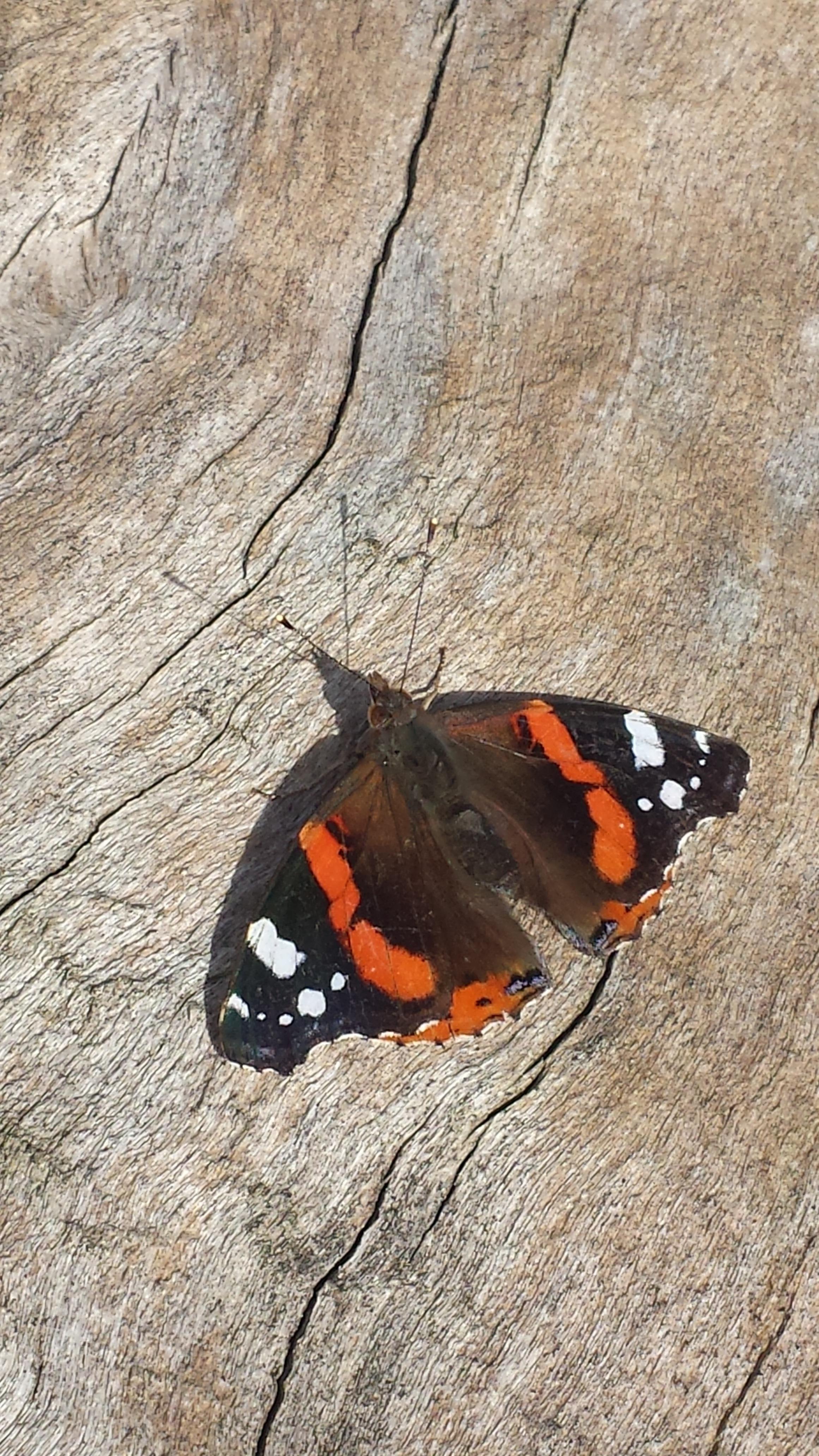Fotos Gratis Naturaleza Ala Madera Hoja Insecto Polilla  ~ Como Son Las Polillas De La Madera