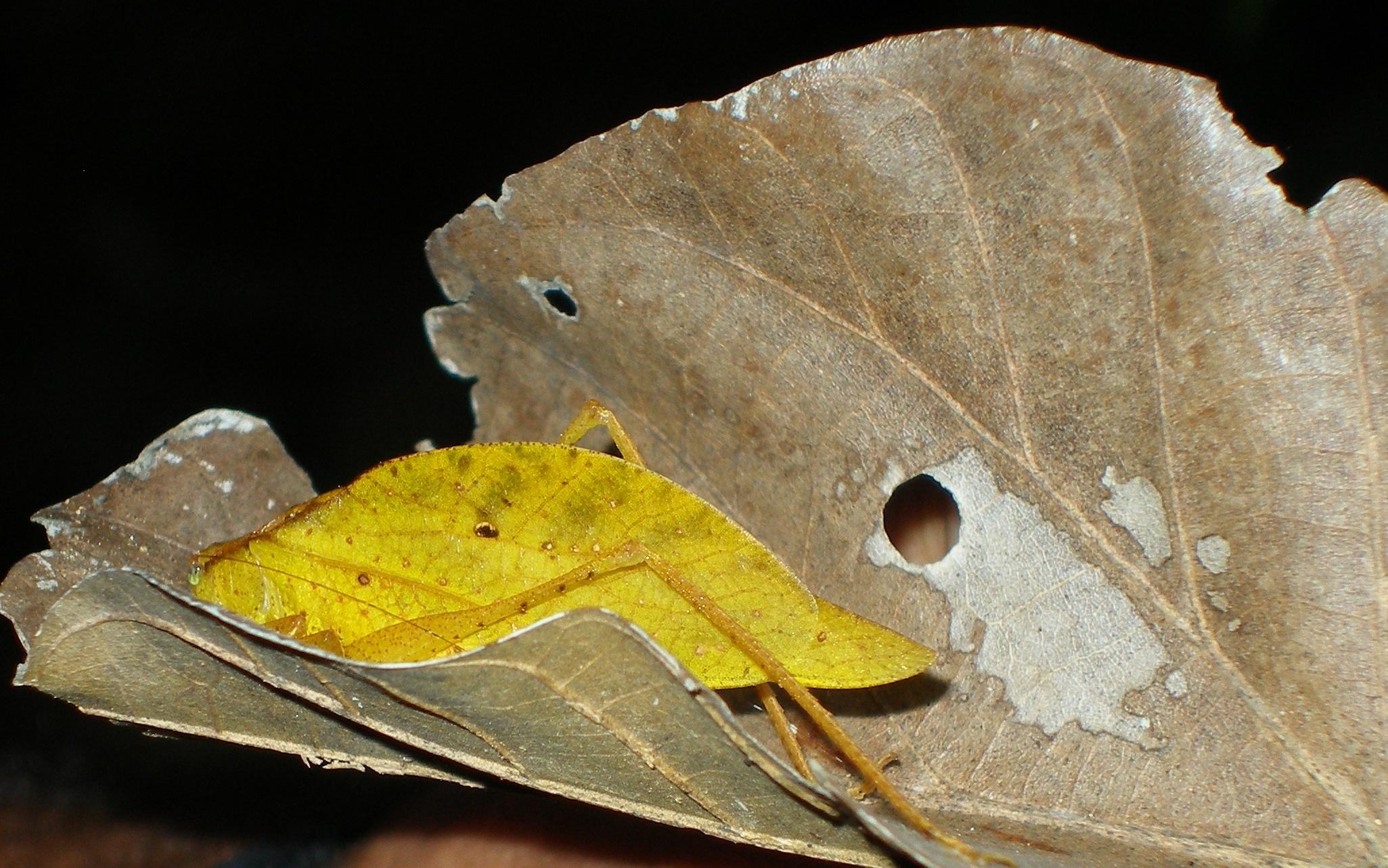 Fotos Gratis Naturaleza Ala Madera Fauna Silvestre Natural  ~ Como Son Las Polillas De La Madera
