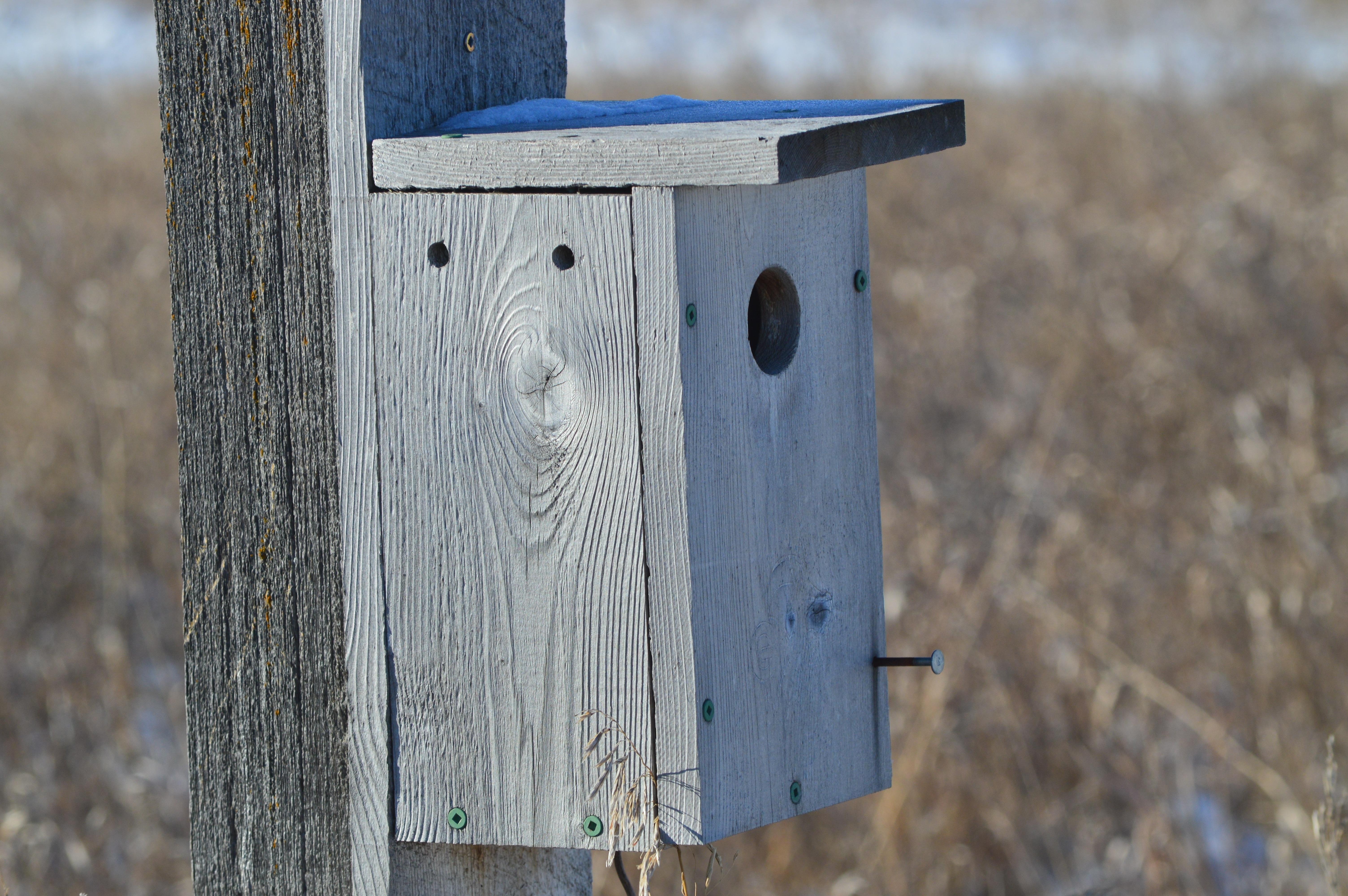 Nature Winter Bird Wing Wood Farm Rustic Environment Park Blue Furniture Material Canada Wooden Prairies Bluebird