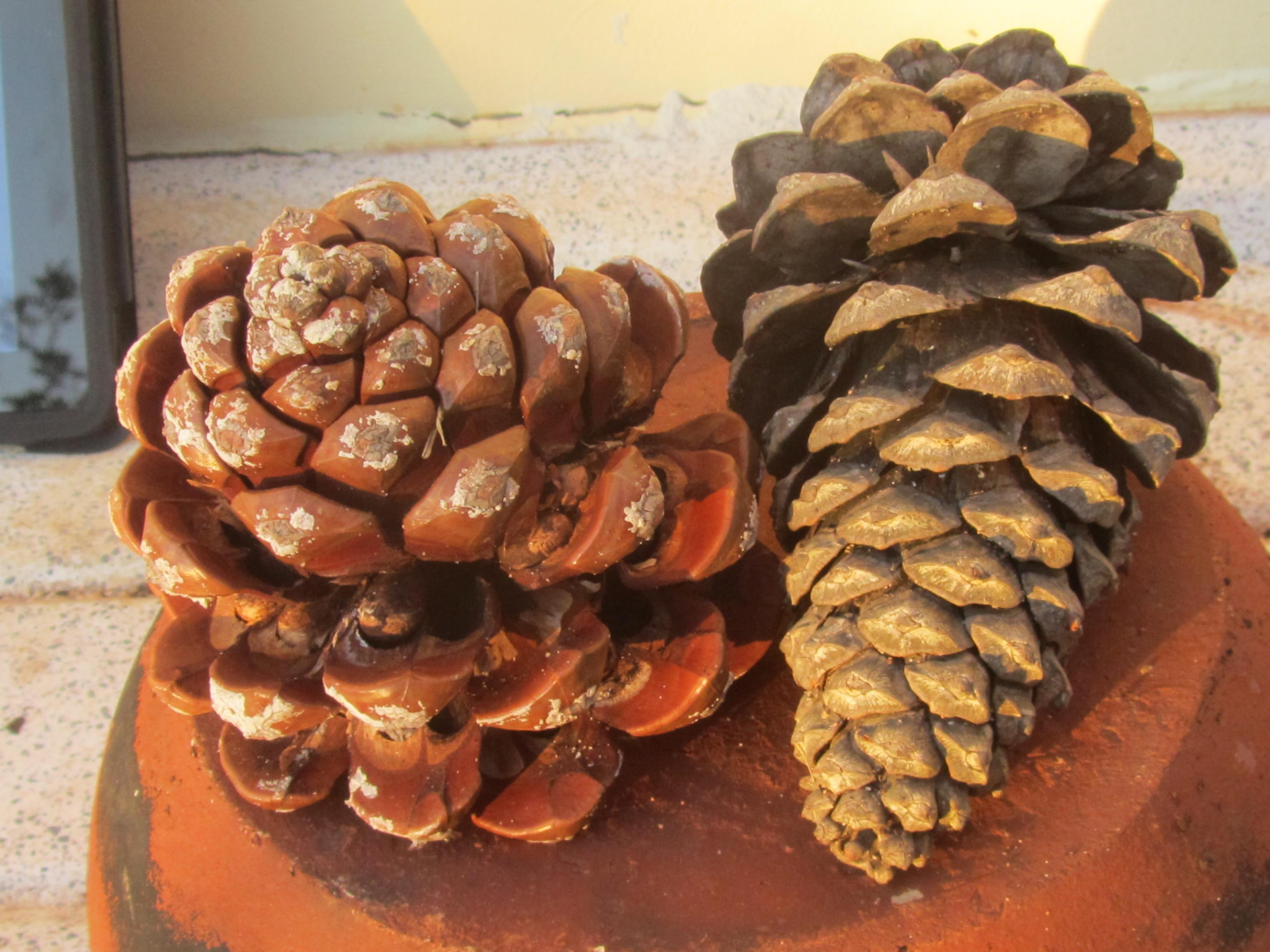 Fotos gratis : naturaleza, invierno, pino, decoración, plato, comida ...