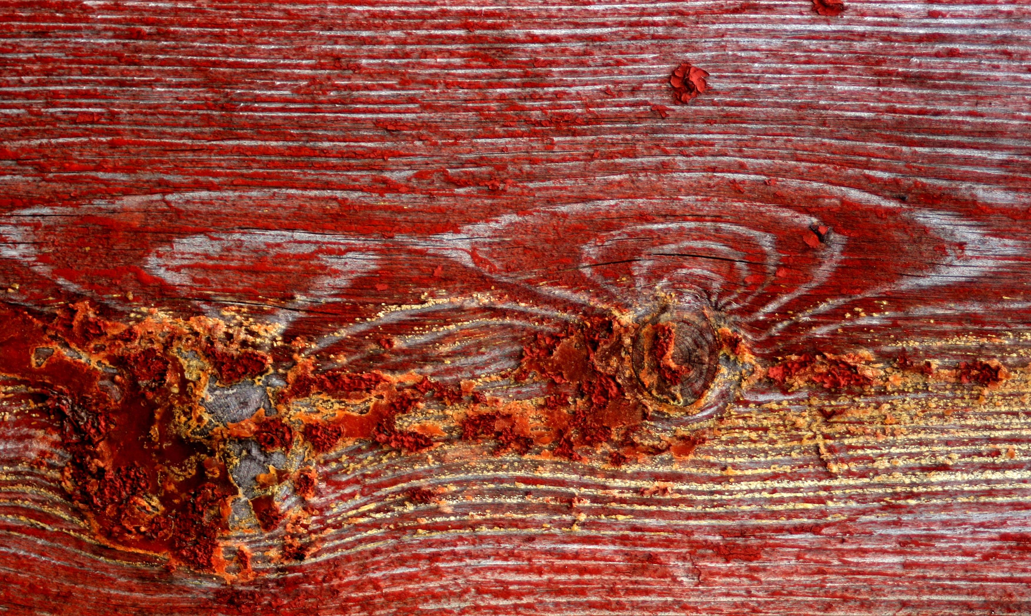 무료 이미지 : 자연, 목재, 포도 수확, 조직, 널빤지, 늙은, 무늬 ...