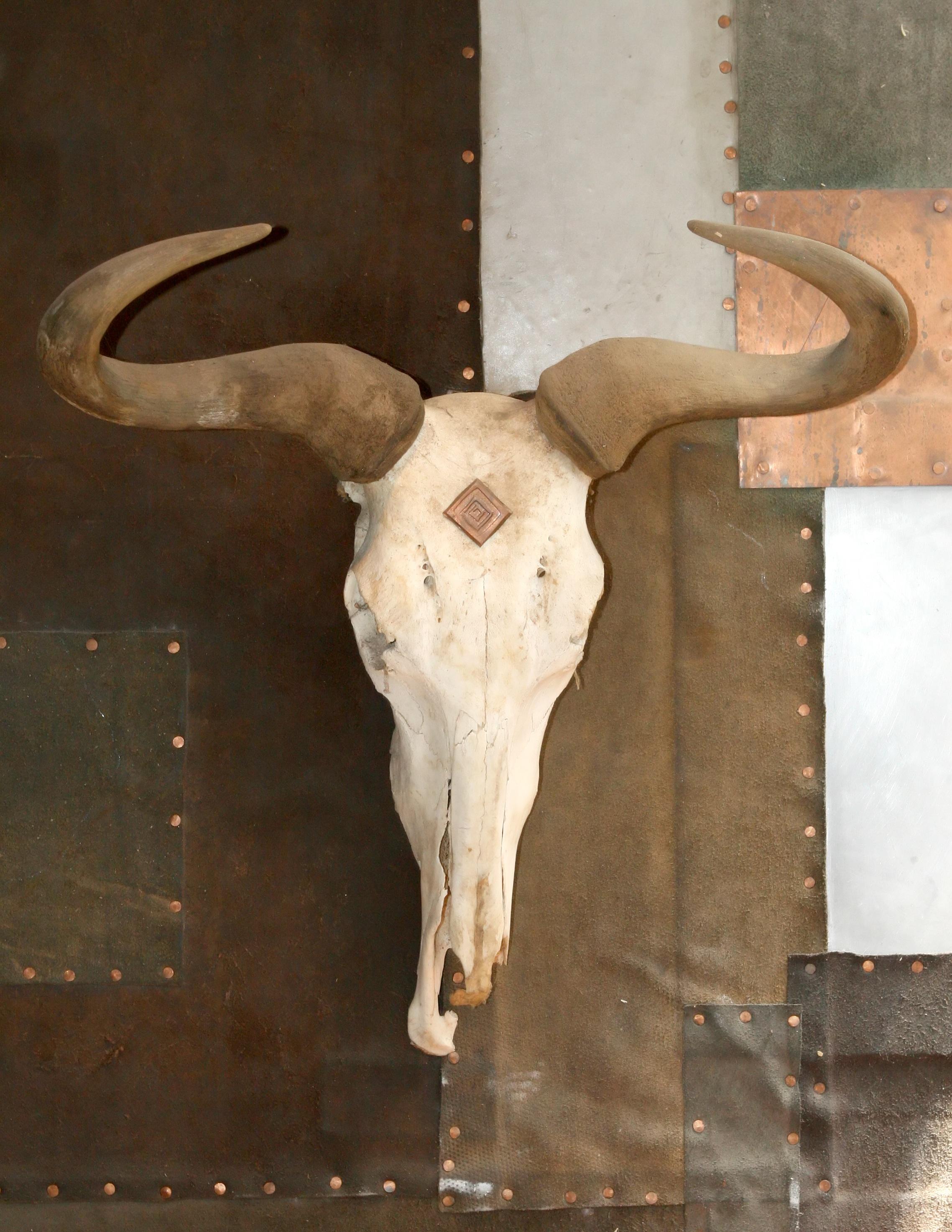 Kostenlose foto : Natur, Holz, Weiß, alt, Tier, Mauer, trocken, Horn ...