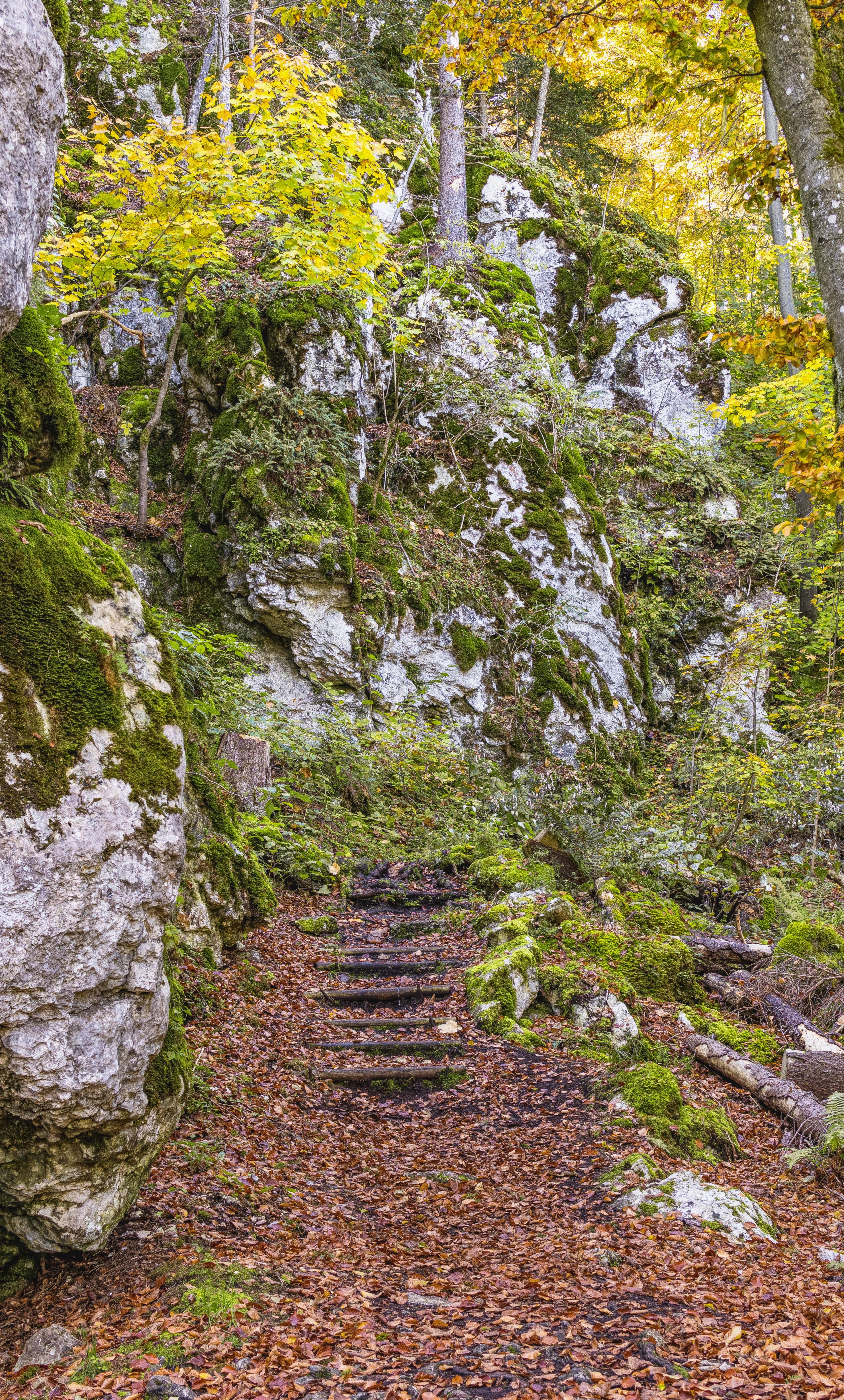 Kostenlose foto : Natur, Wald, Blatt, Vegetation, Baum, Abscheulich ...
