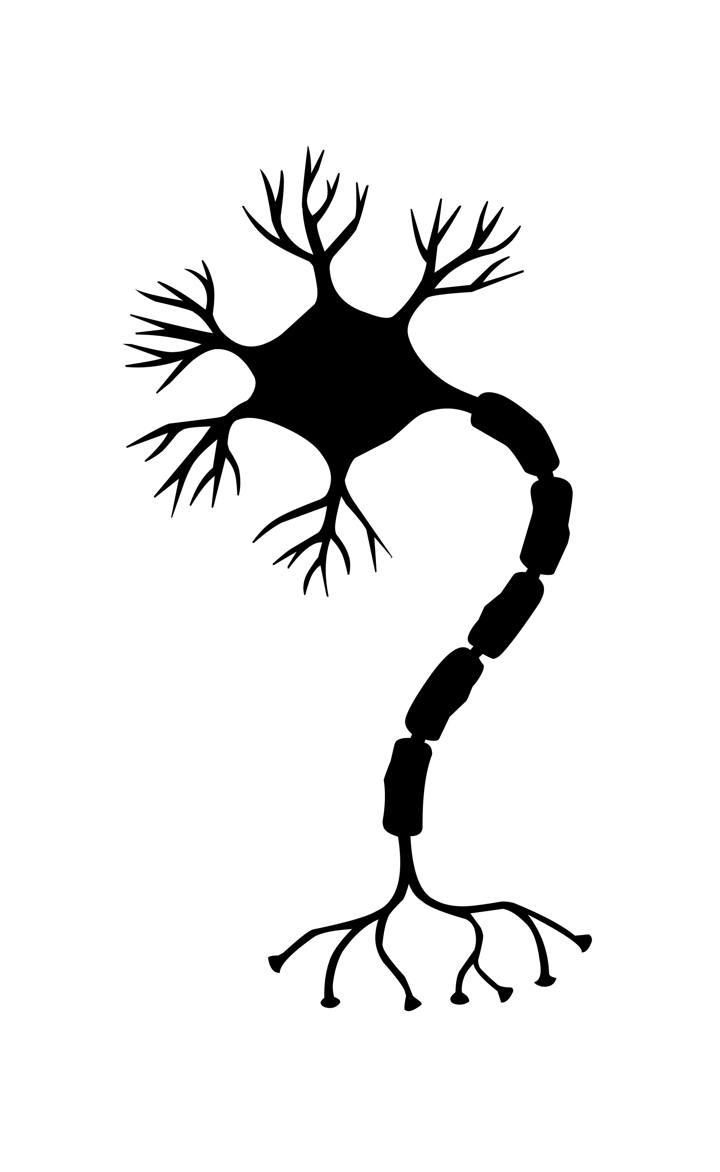 Free Images Nerve Cell Neuron Brain Neurons Nervous System