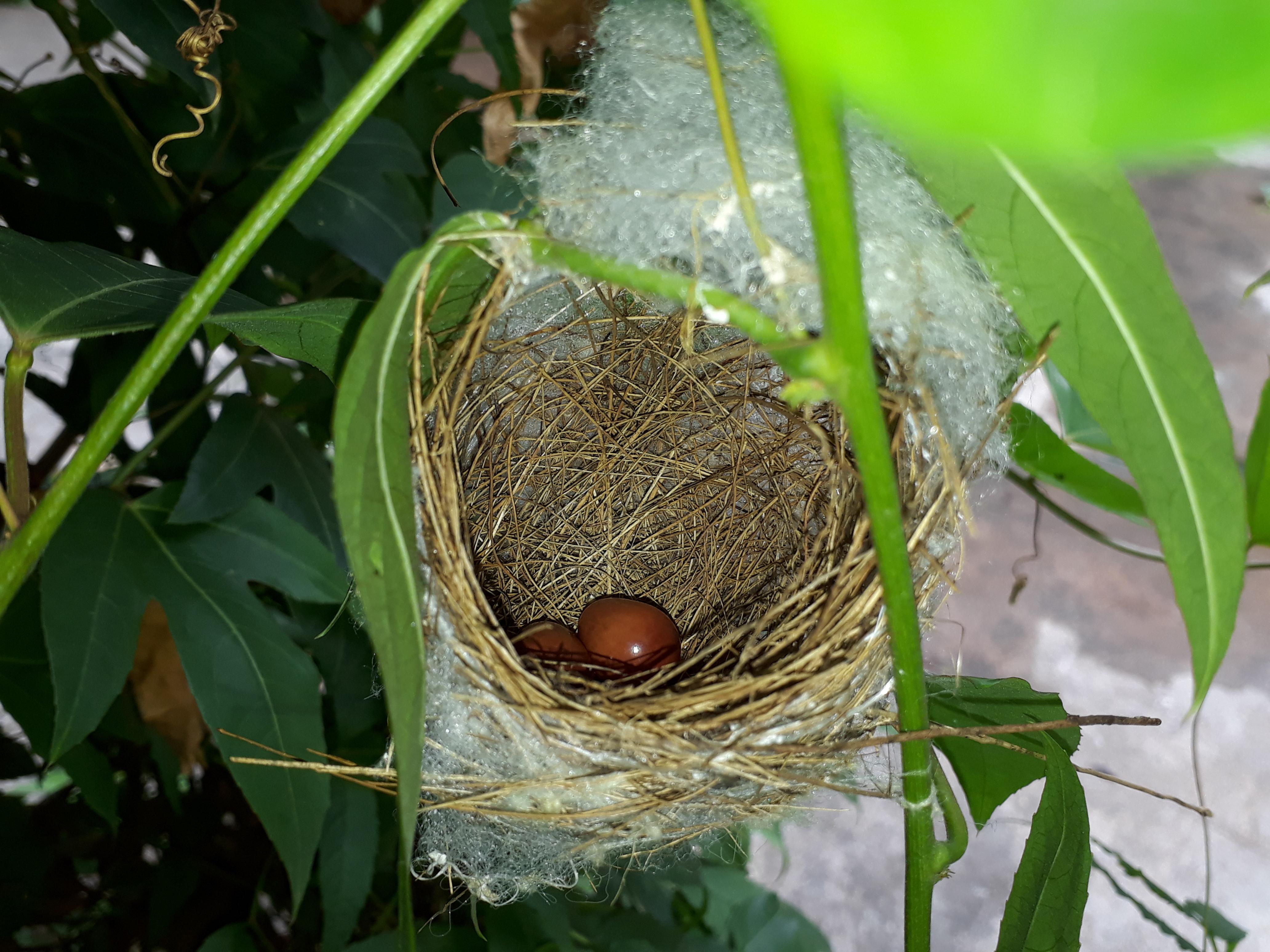 гнезда птиц фото и описание