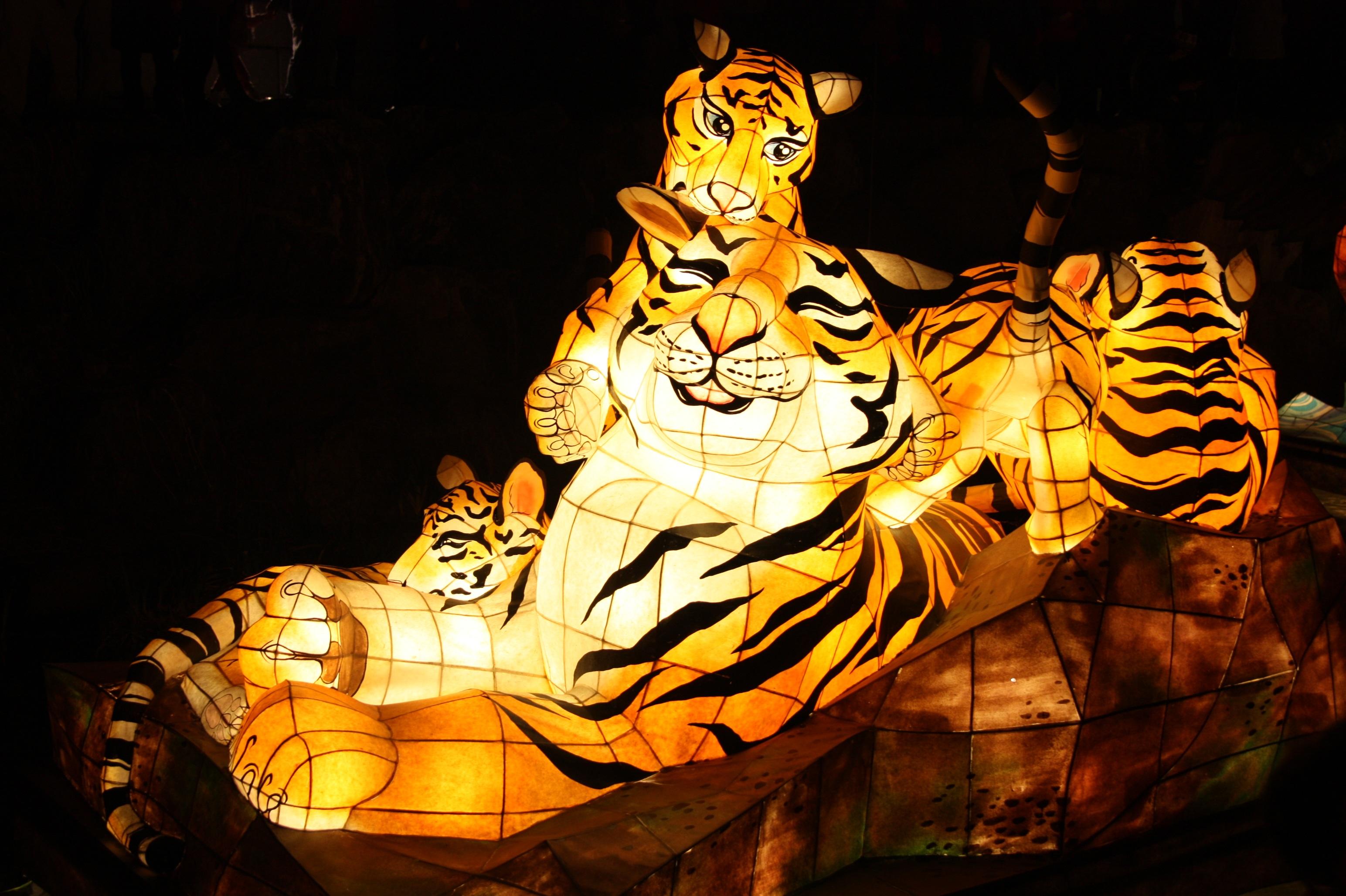 Free Images Night Amut Park Lighting Art Tiger