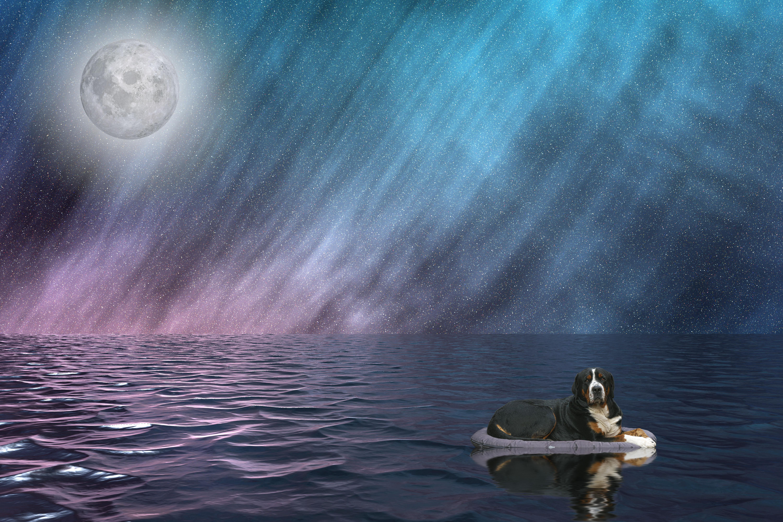 Banco De Imagens Noite Cachorro Animal Beached Agua Oceano