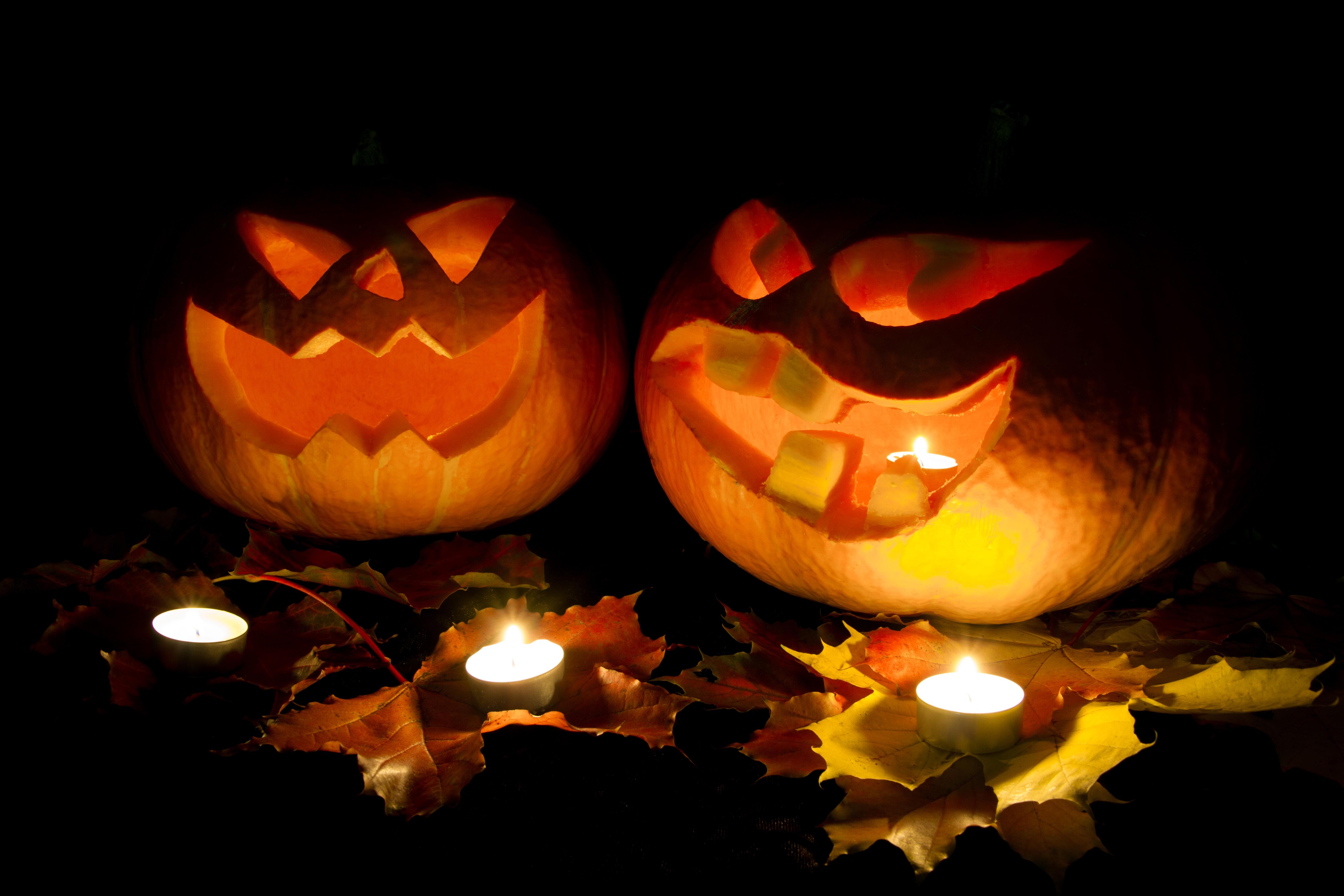 Halloween Verlichting.Gratis Afbeeldingen Nacht Vallen Bloem Bloemblad
