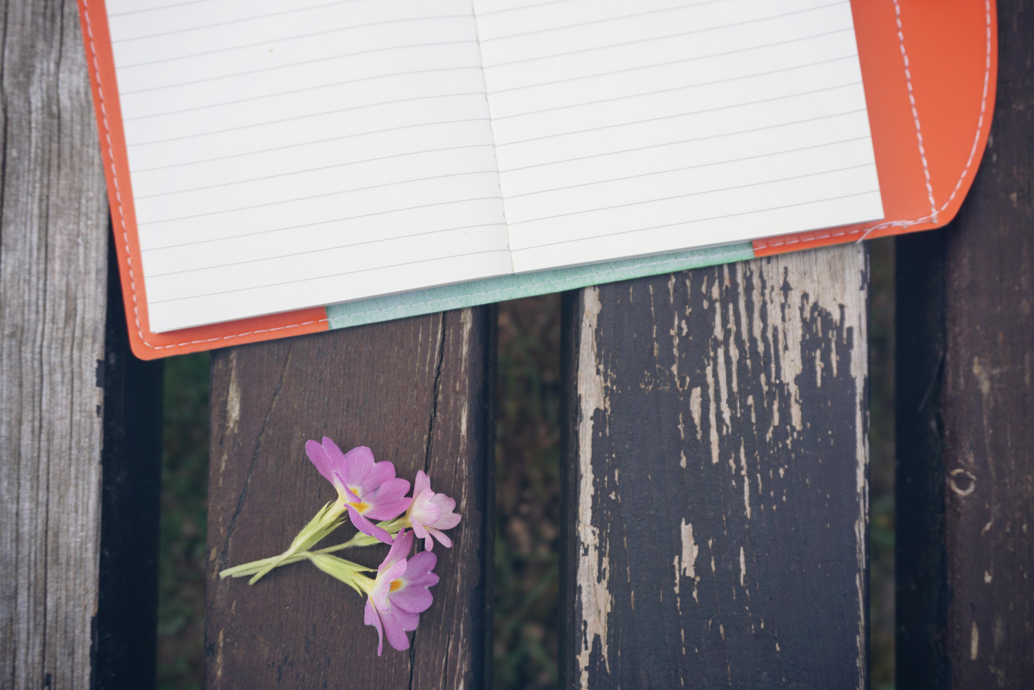 Kostenlose foto : Notizbuch, Natur, kreativ, Pflanze, Holz, Weiß ...